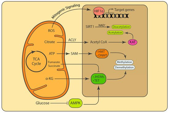 biology-08-00035-g003-550.jpg