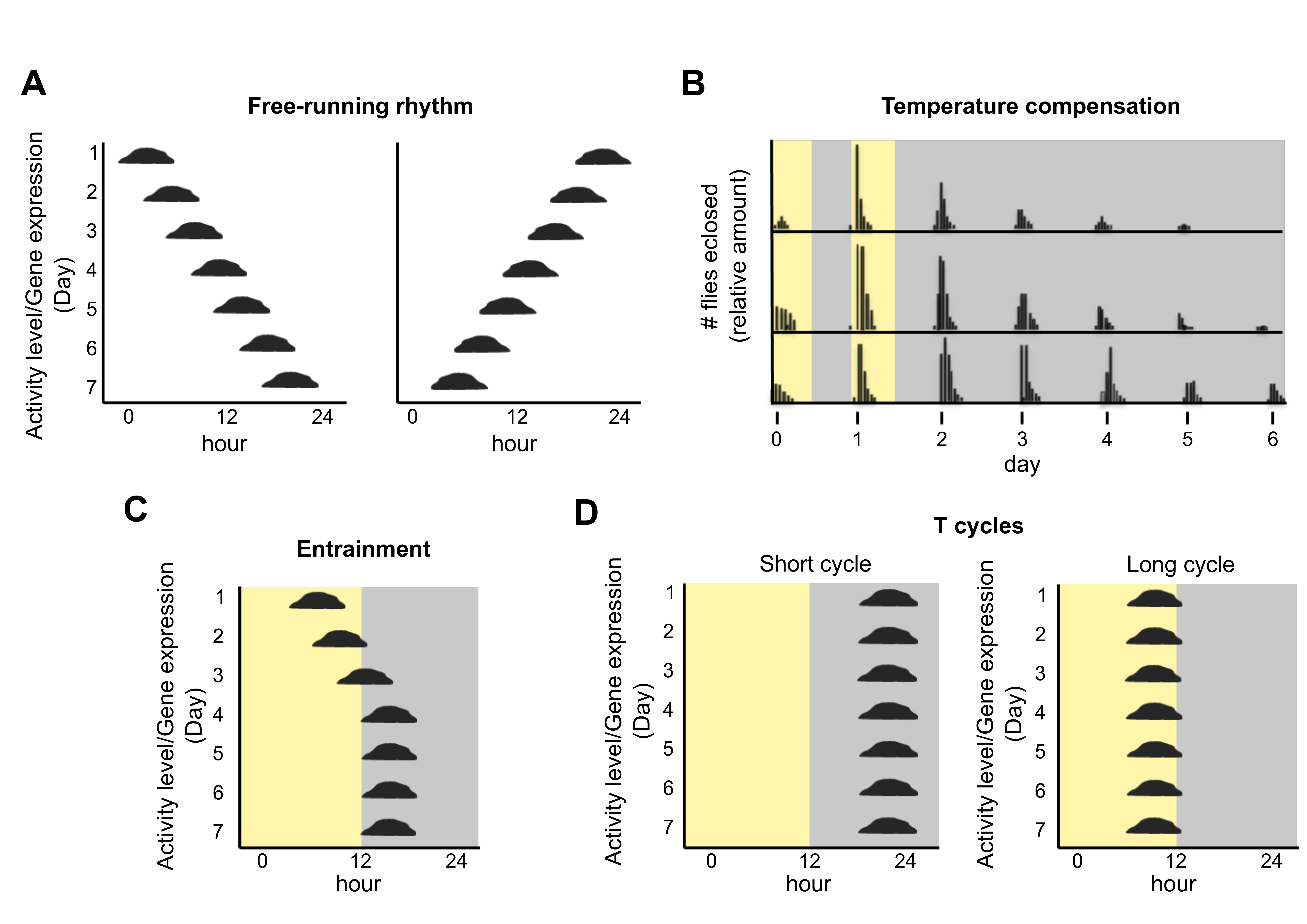 Biology | Free Full-Text | Are There Circadian Clocks in Non