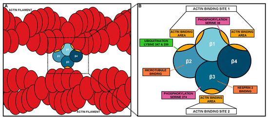 Biology 09 00403 g001 550