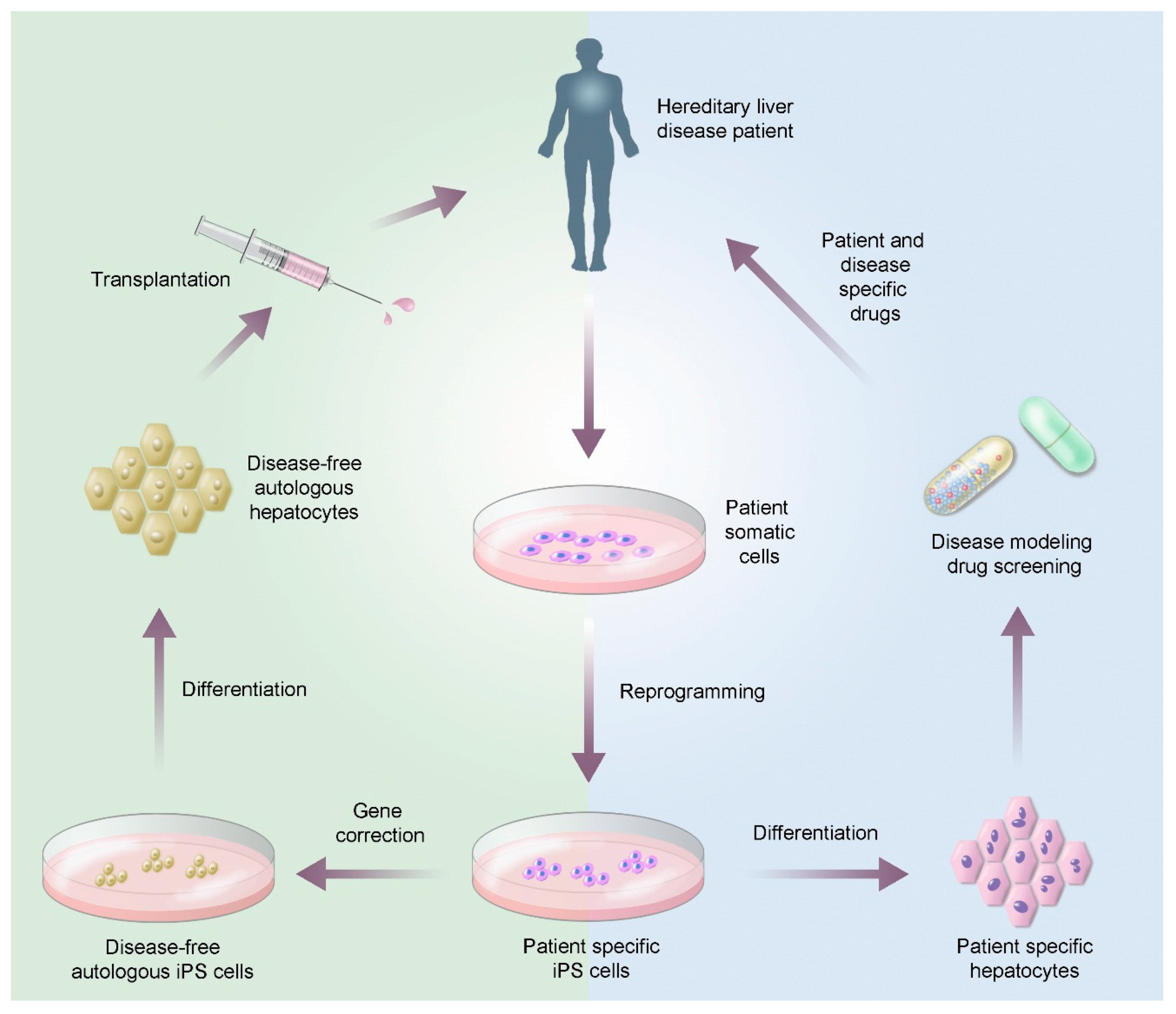 Biomedicines Free Full Text Stem Cell Therapies For