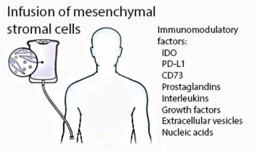free fulltext mesenchymal stromal cells what is the mechanism in acute disease html