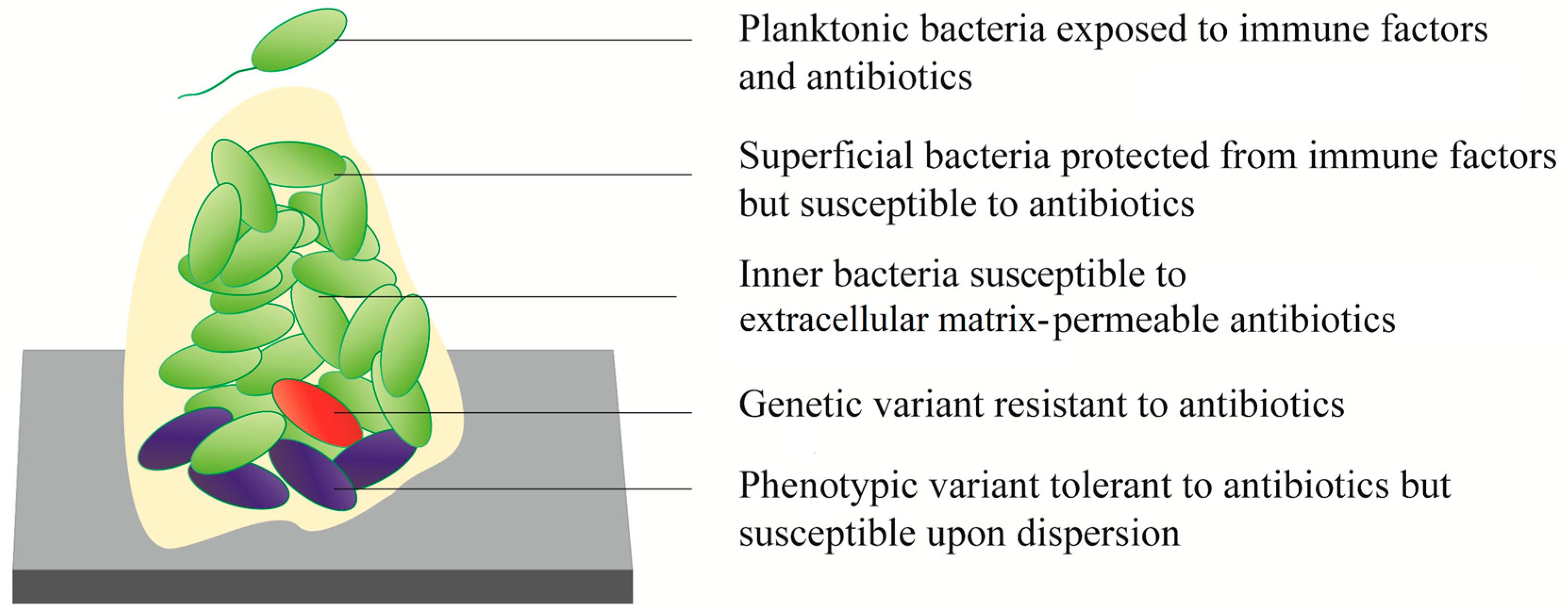 Biomedicines | Free Full-Text | Current Status of In Vitro