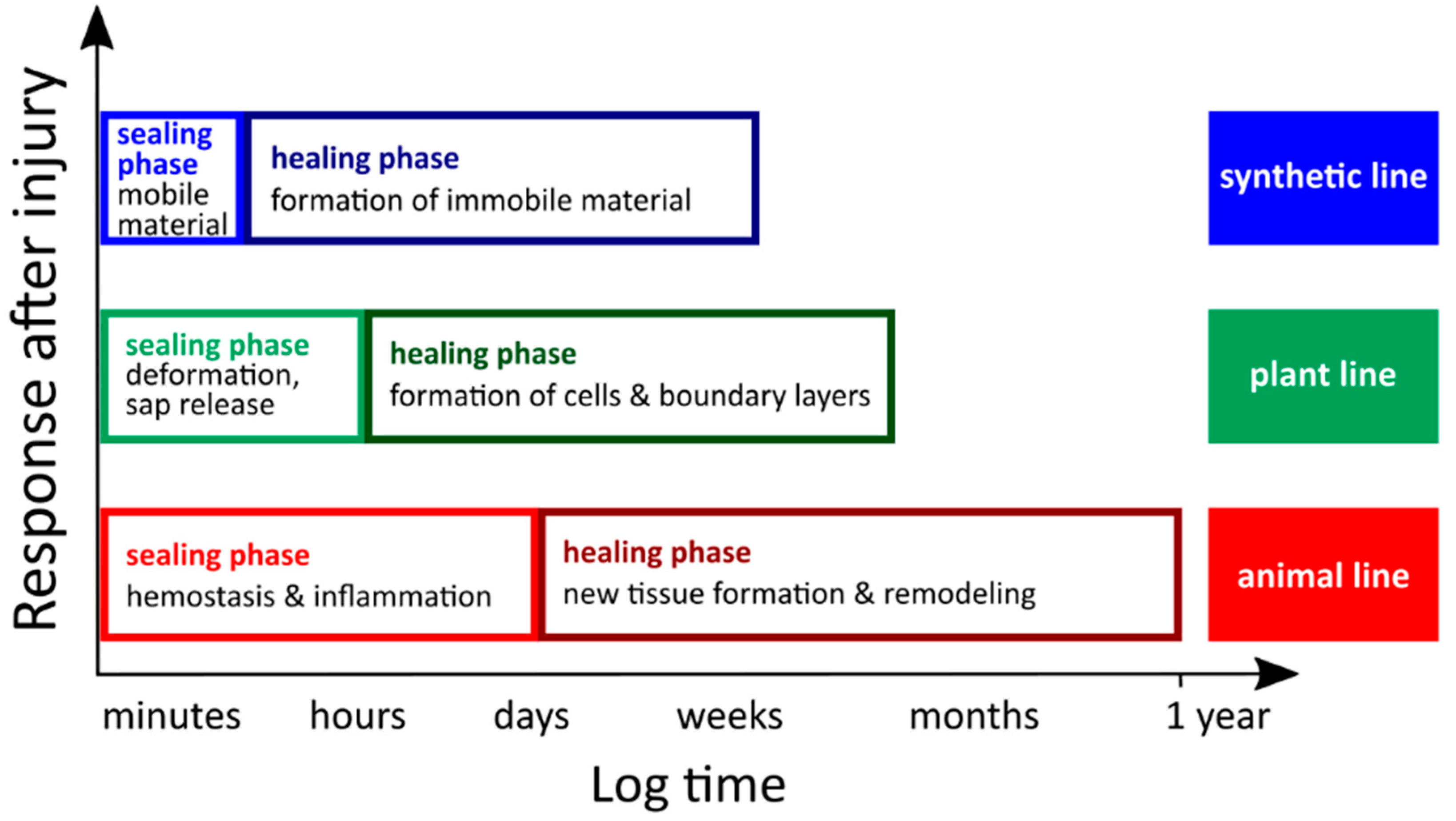 Biomimetics | Free Full-Text | An Overview of Bioinspired and Biomimetic  Self-Repairing Materials | HTML