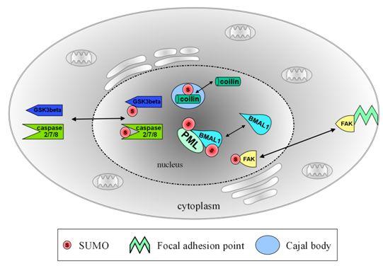 marks essentials of medical biochemistry pdf free download