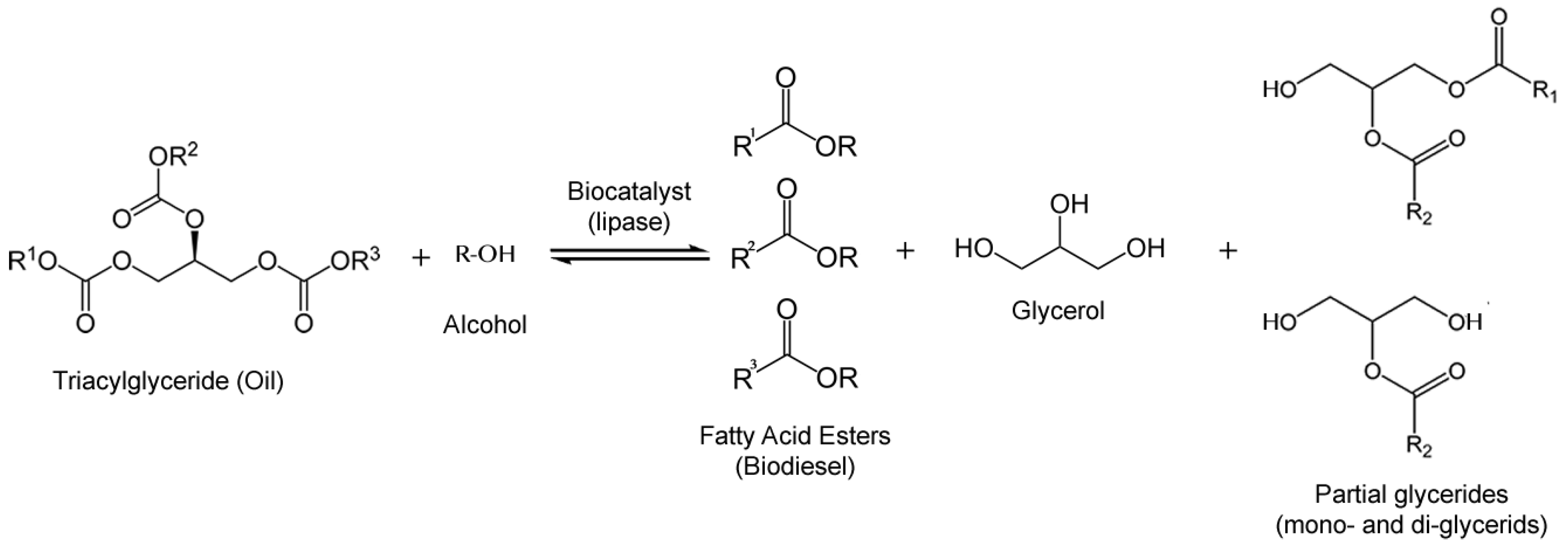 production of biodiesel by enzymatic transesterification Biodiesel production by transesterification using immobilized enzymatic the production of biodiesel transesterification for biodiesel production.