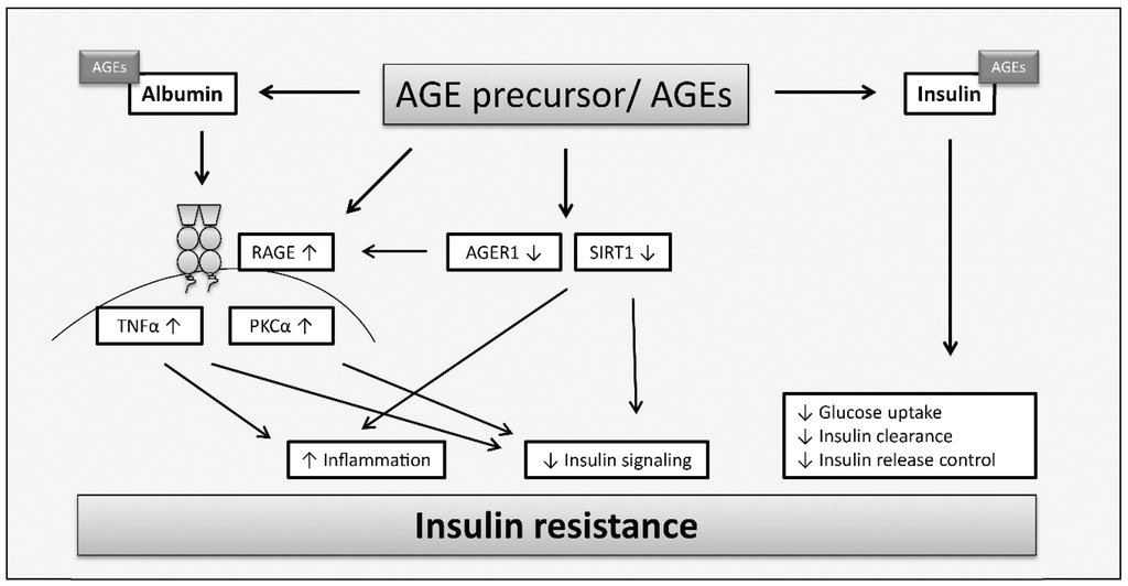 insulin and tca cycle Genetic activation of pyruvate dehydrogenase alters oxidative substrate selection to induce skeletal muscle  mitochondrial enzyme that links glycolysis to the tca cycle by converting pyruvate to acetyl-coa additionally, fatty acid-  tca (%) basal insulin 0 20 40 60 80 100.