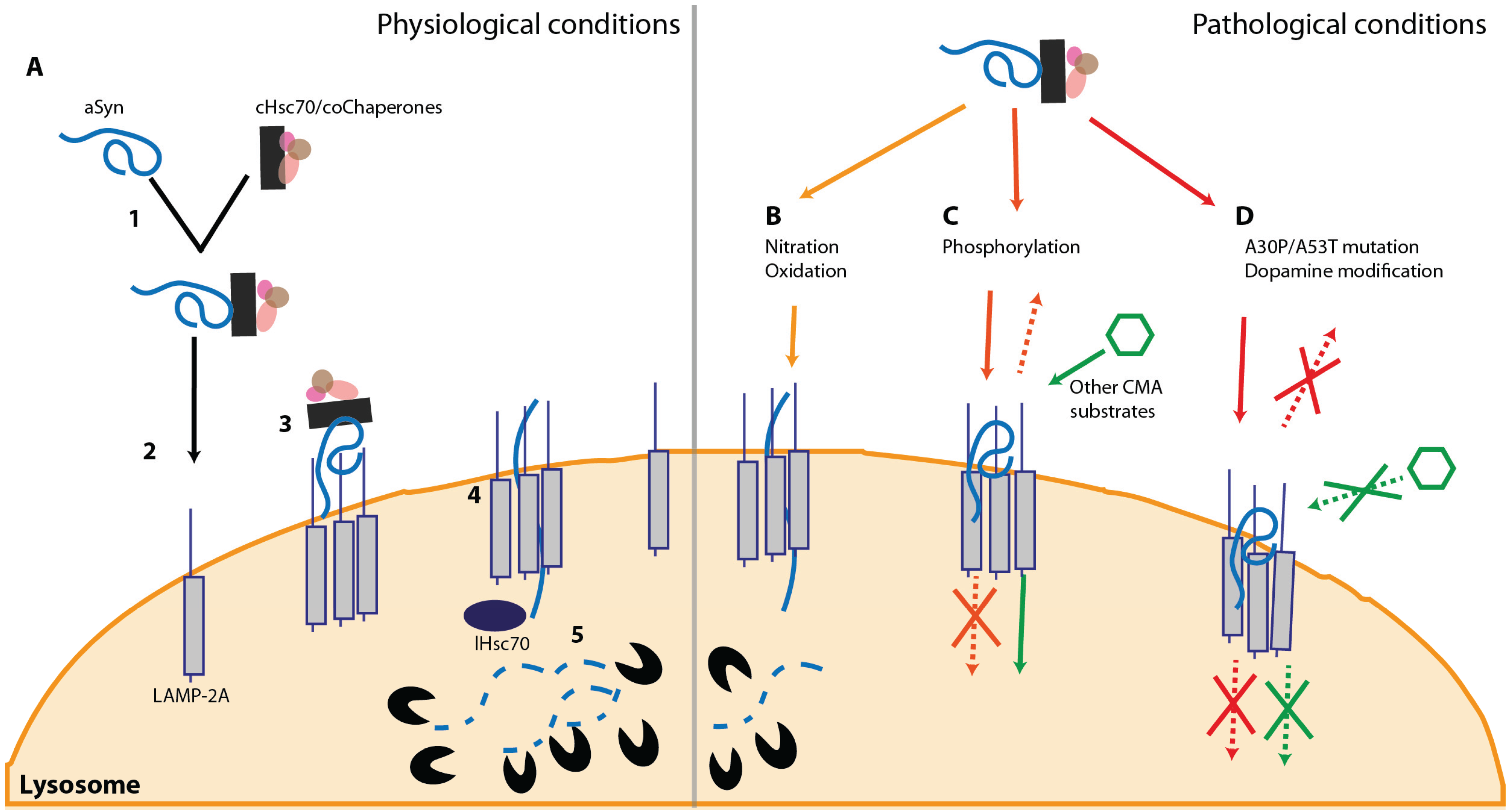 Biomolecules | Free Full-Text | The Interplay between Alpha