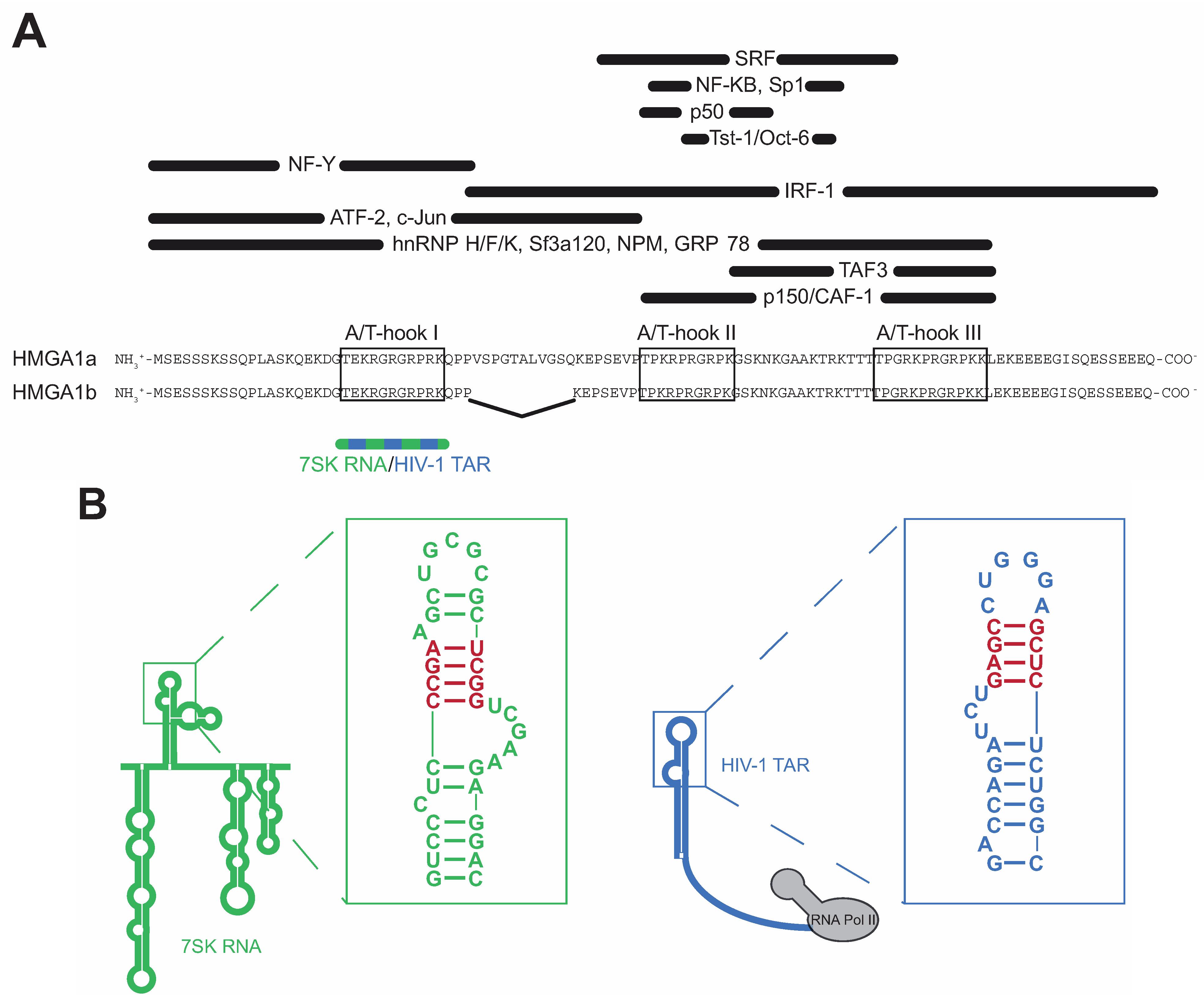 Biomolecules | Free Full-Text | RNA-Mediated Regulation of