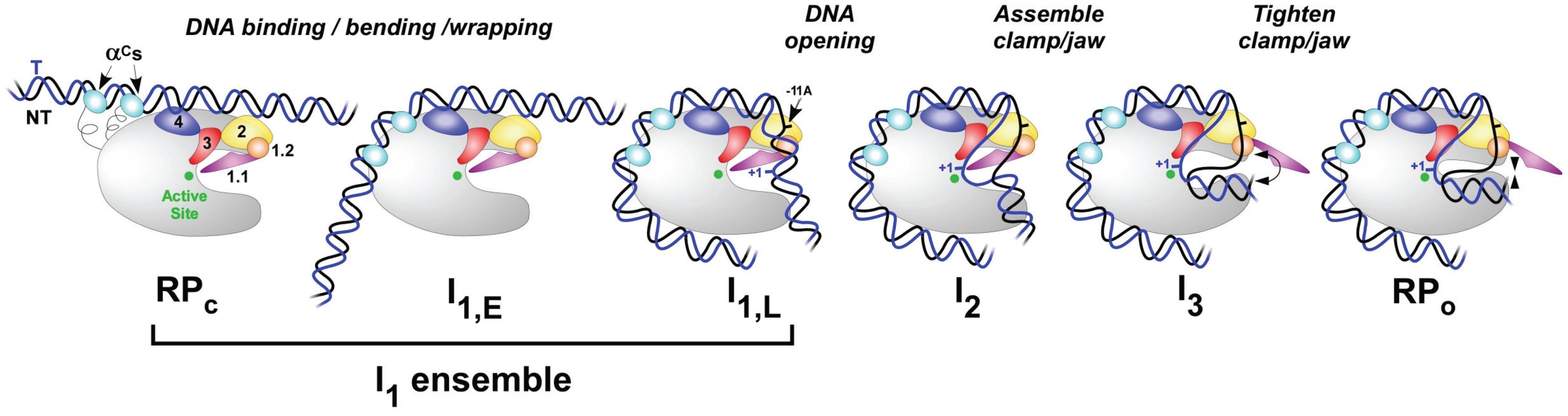 Biomolecules 05 01035 g003