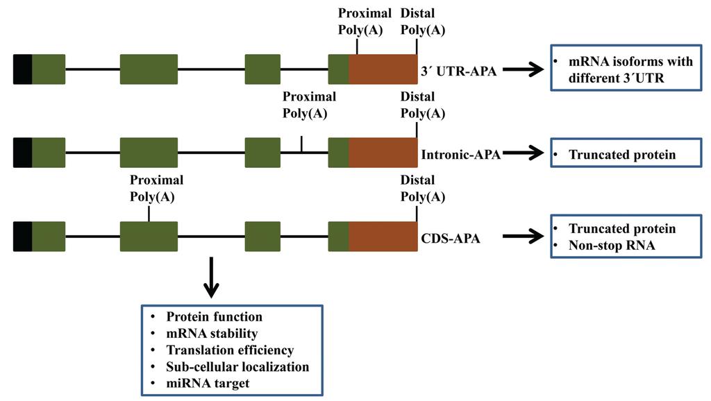 13.4 gene regulation and expression pdf