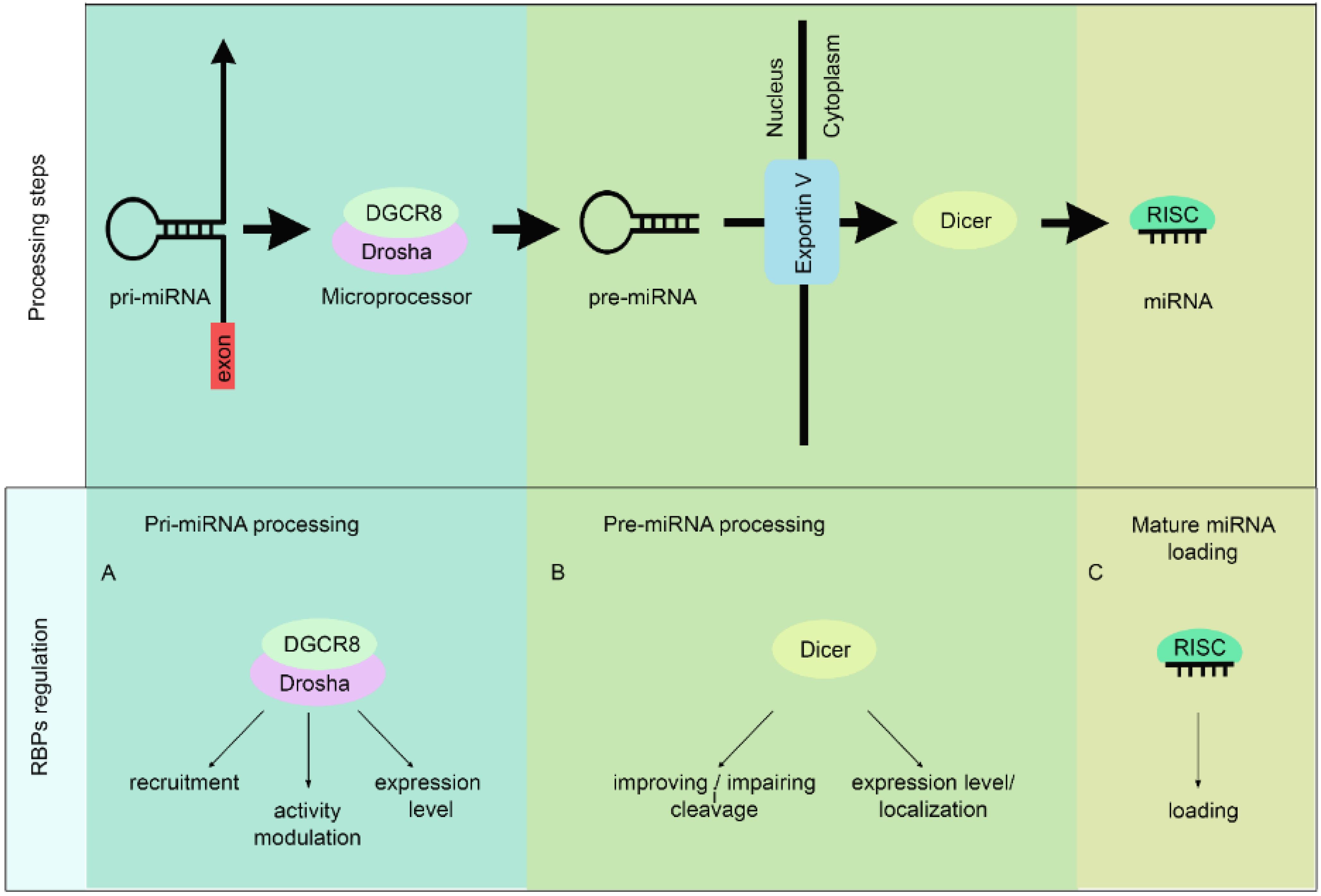 Page 1 af sinergia 42 en - Biomolecules 05 02363 G001 1024