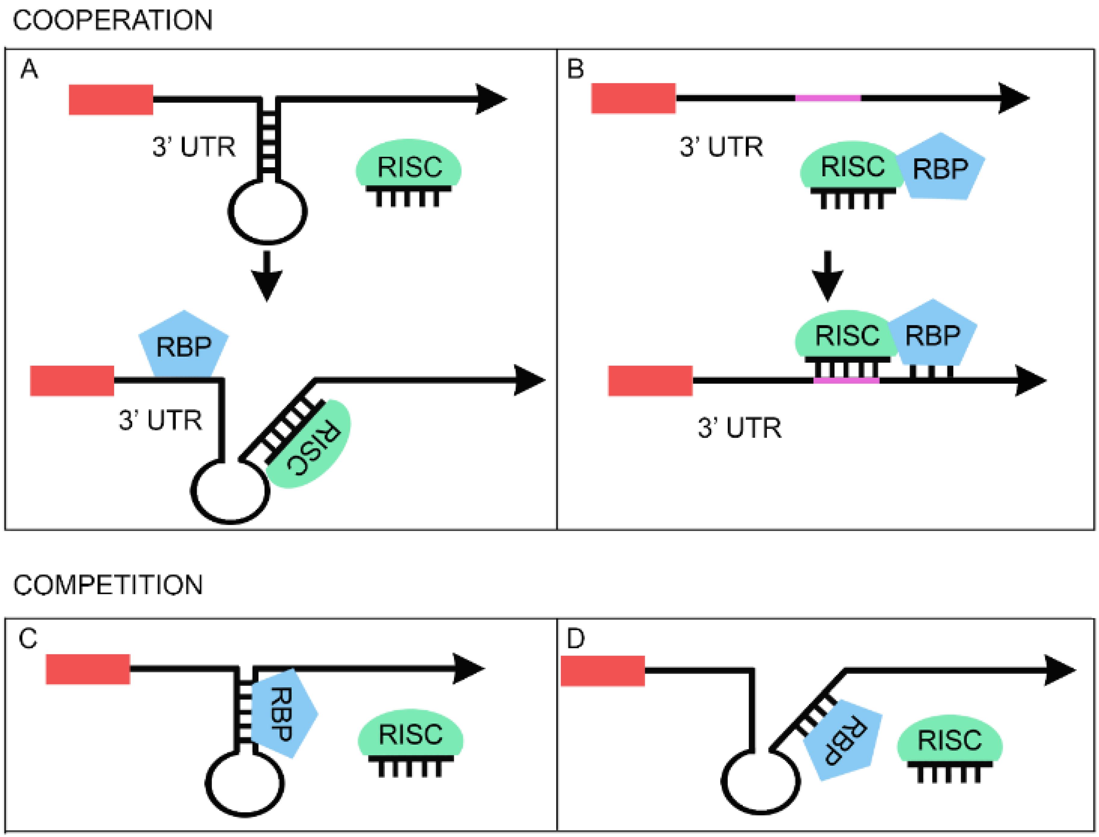 Page 1 af sinergia 42 en - Biomolecules 05 02363 G002 1024