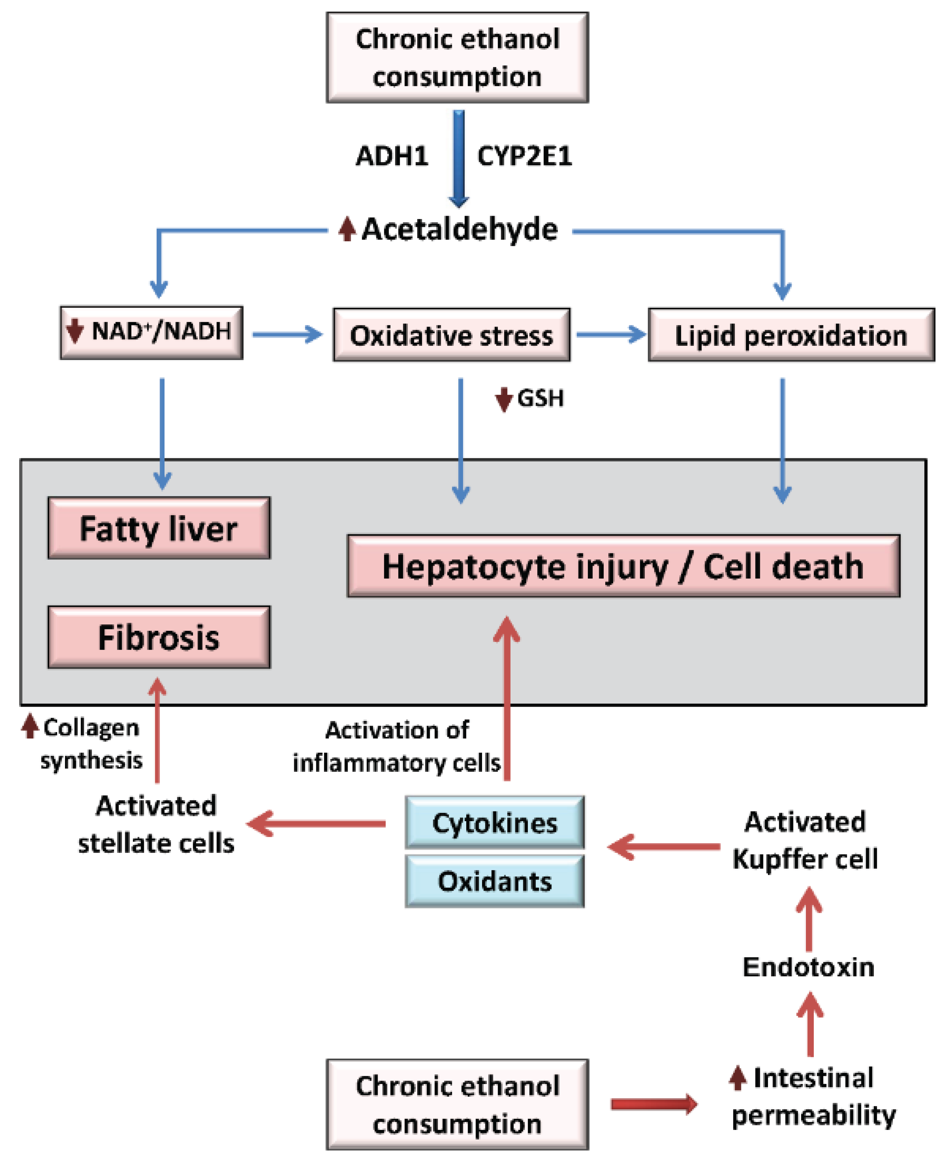 Liver Disease Overview