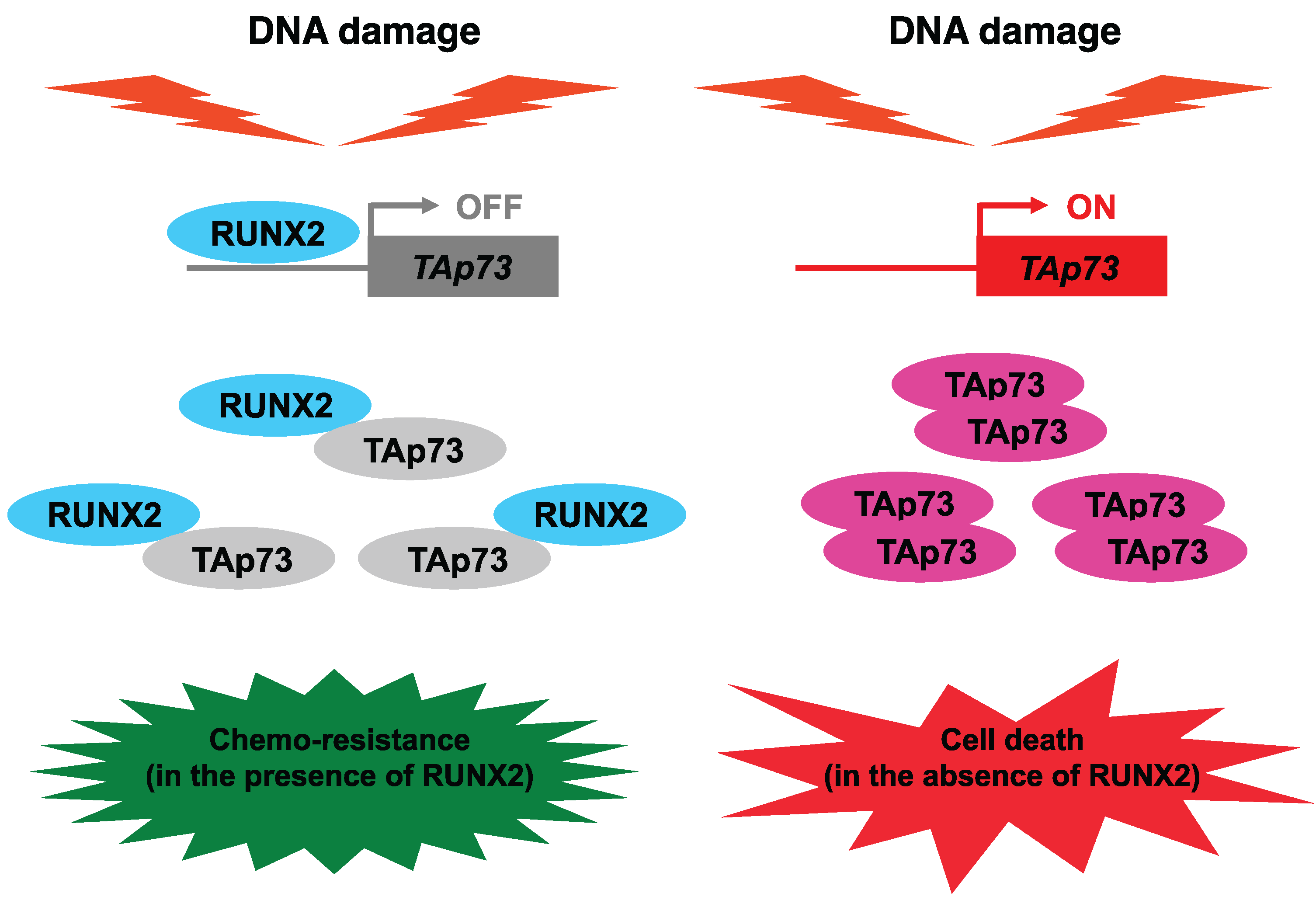 Biomolecules | Free Full-Text | Novel Implications of DNA Damage