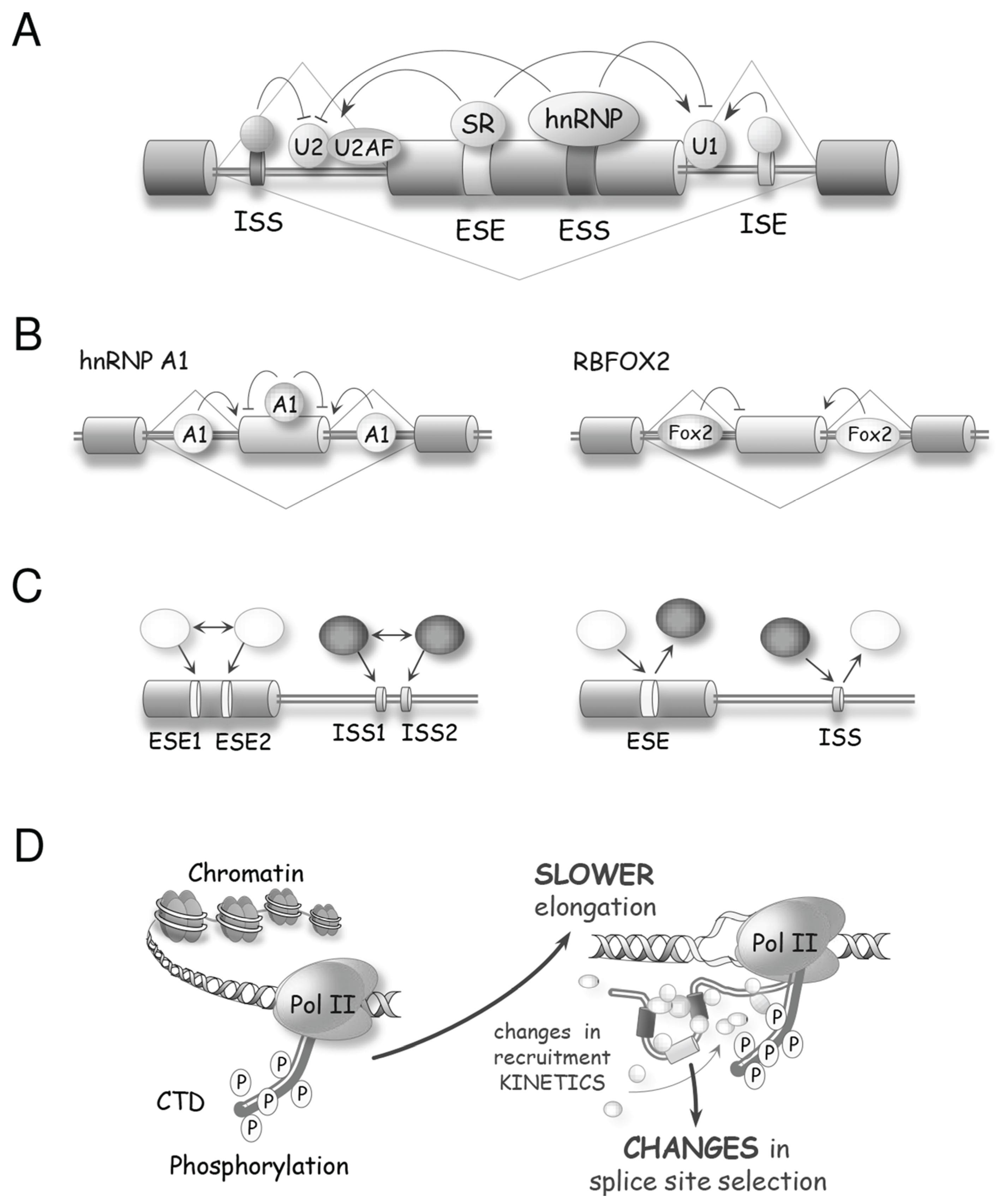 Biomolecules 05 02935 g003a 1024