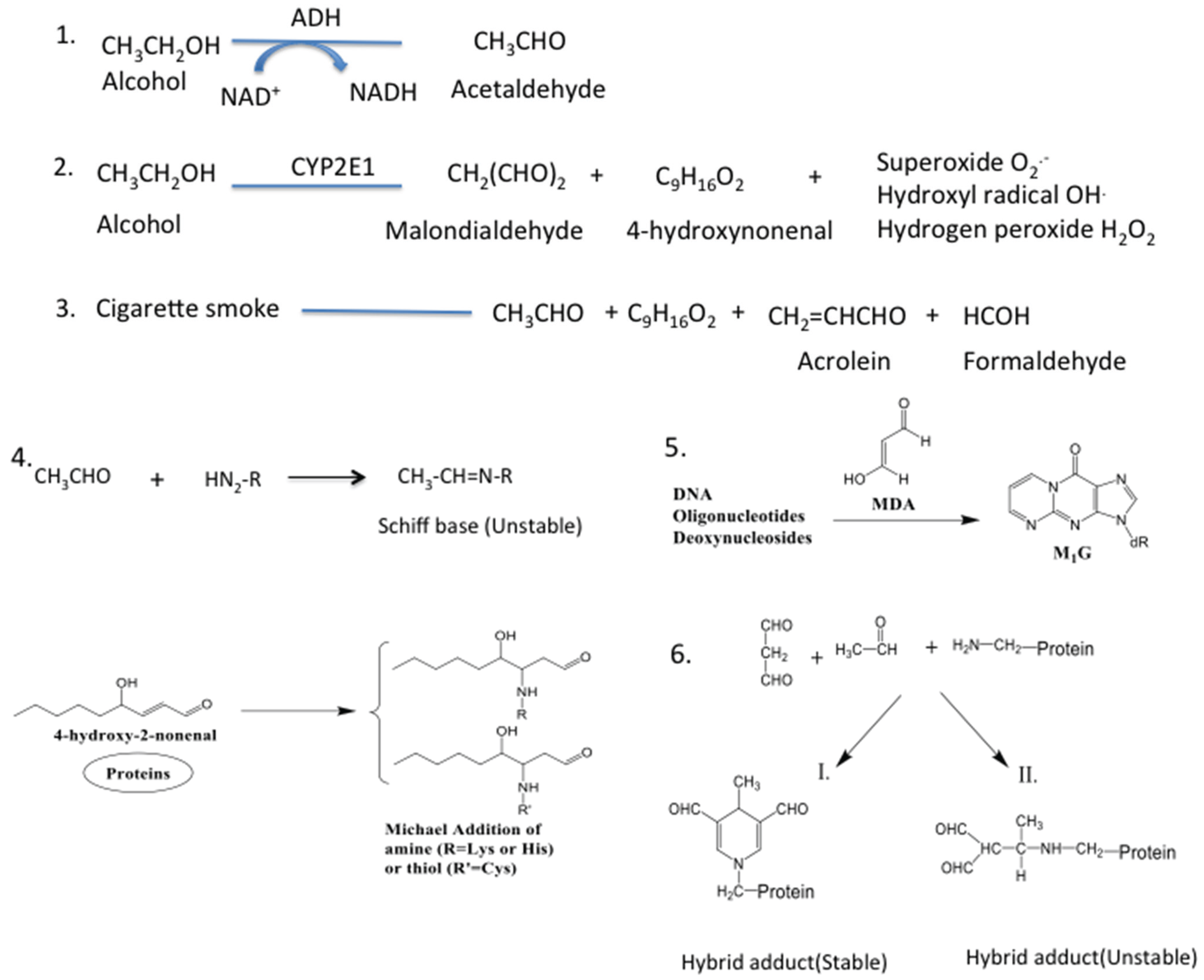 Biomolecules   Free Full-Text   Alcohol, Aldehydes, Adducts and ...