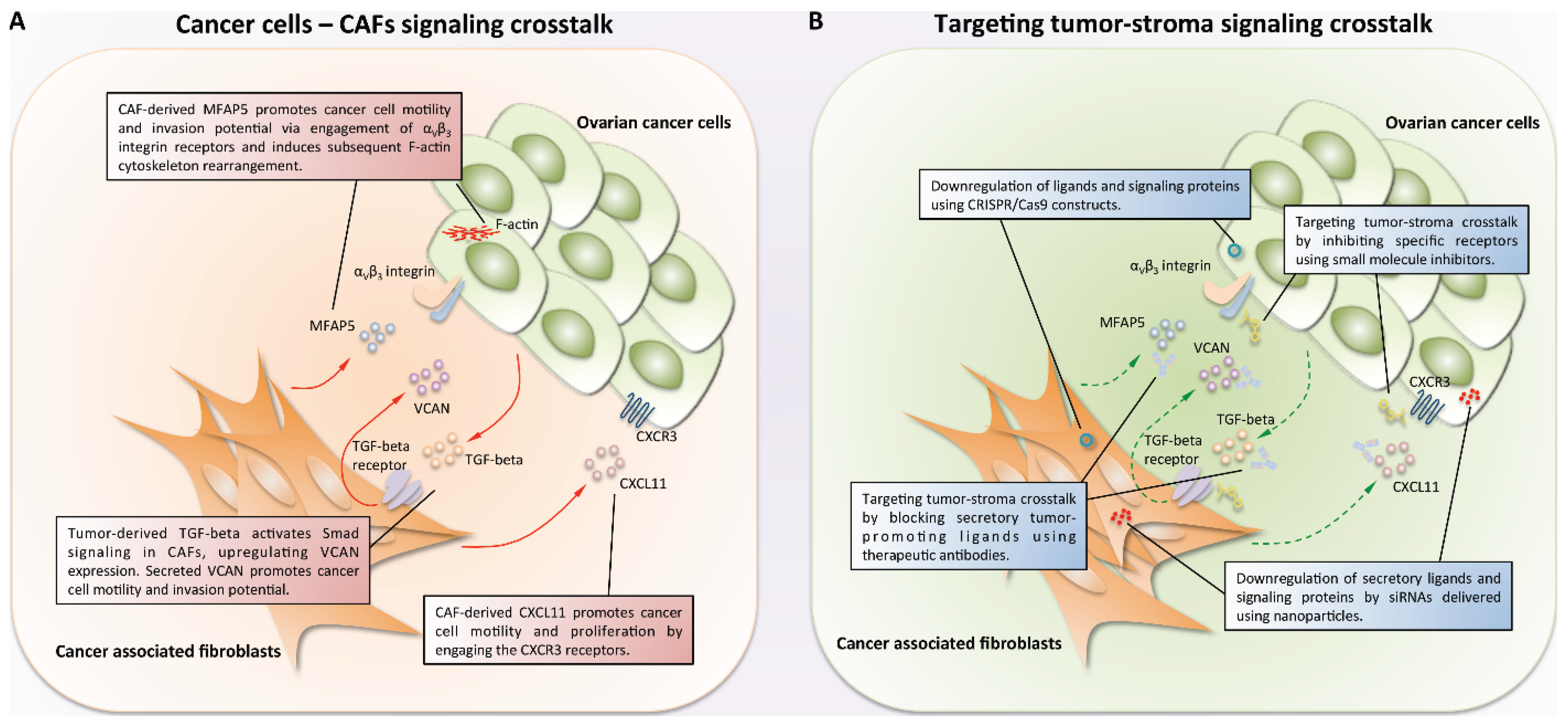 Biomolecules Free Full Text Targeting Stromal Cancer Cell Crosstalk Networks In Ovarian Cancer Treatment