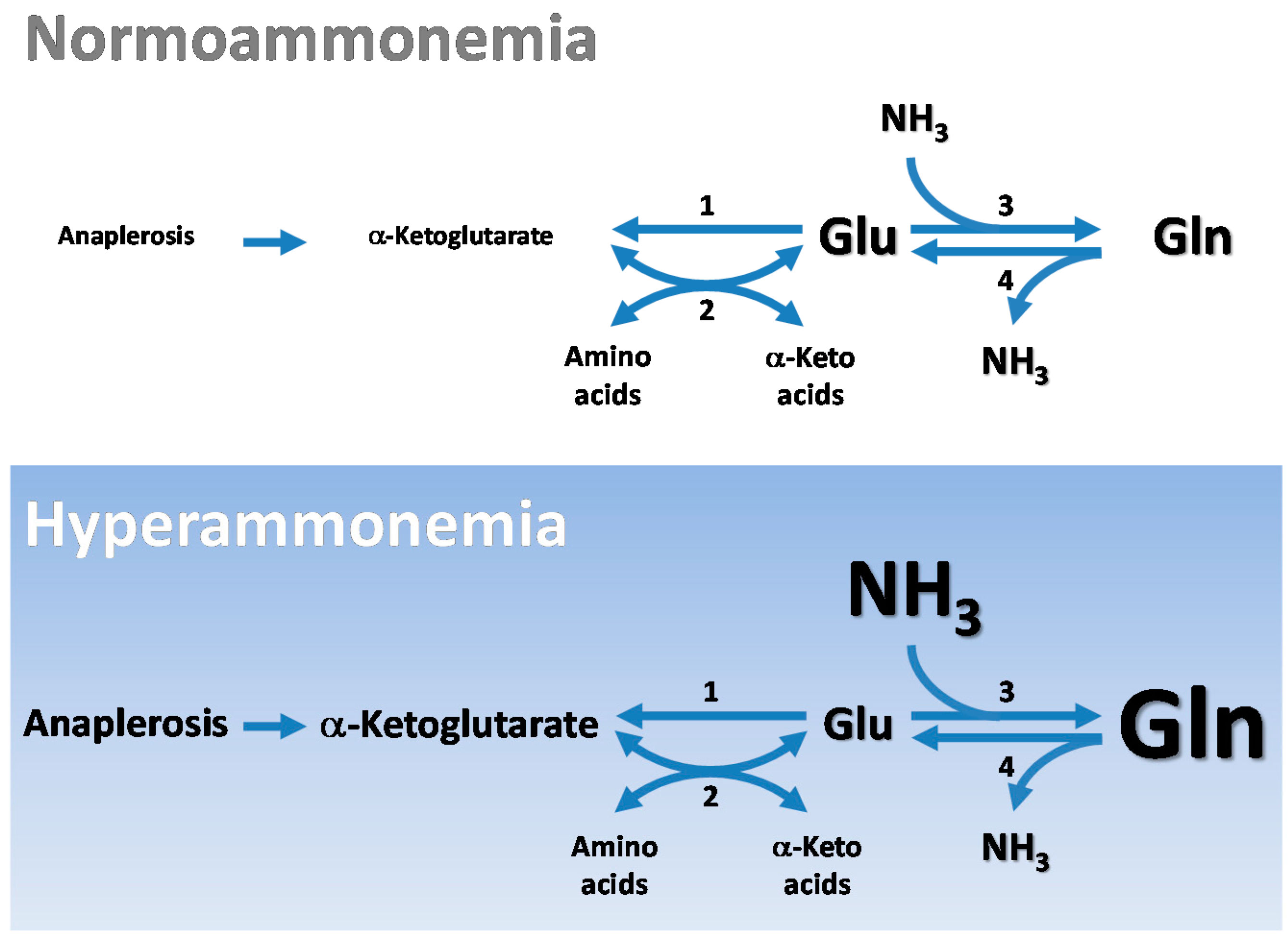 Biomolecules | Free Full-Text | Central Role of Glutamate Metabolism