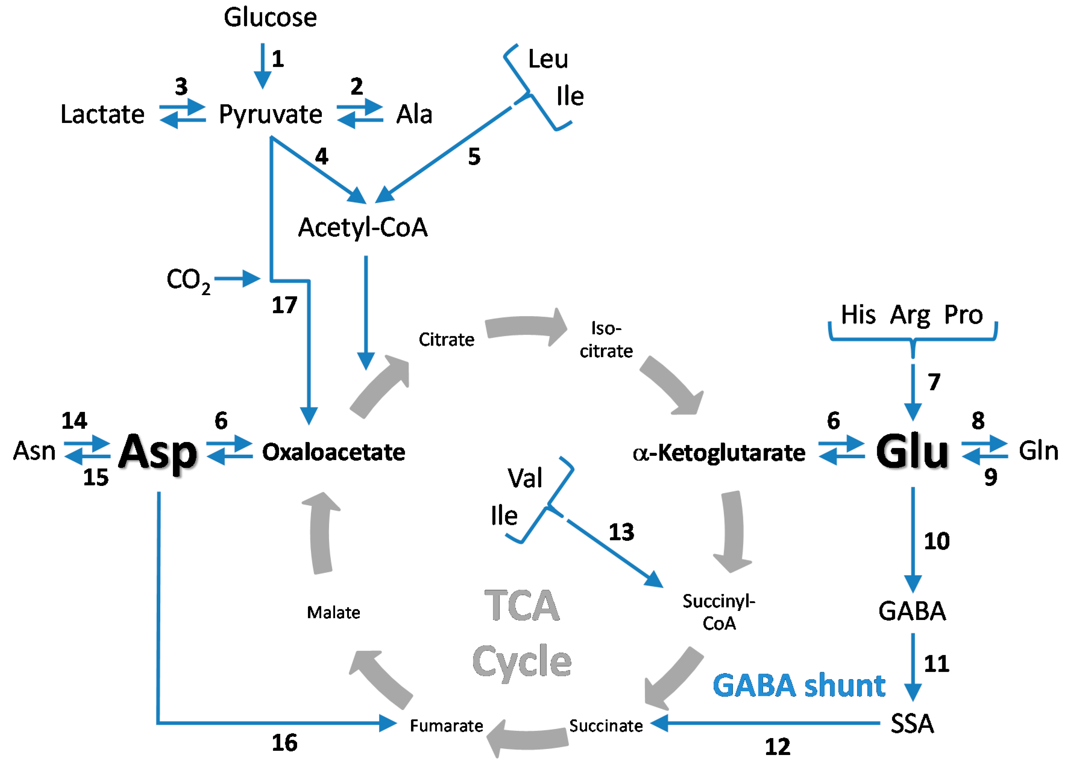 Biomolecules | Free Full-Text | Central Role of Glutamate ... | 3541 x 2536 png 371kB