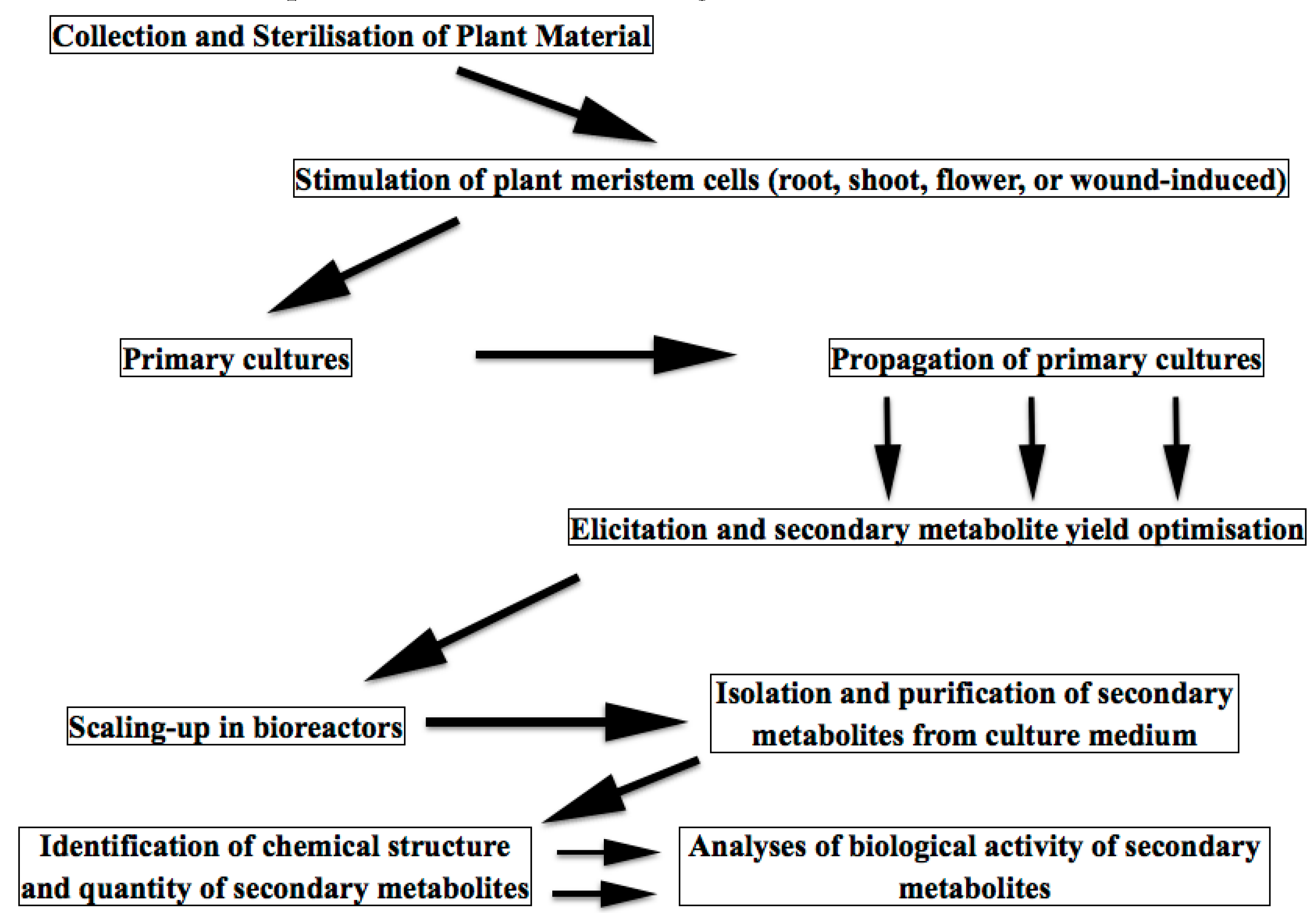Biomolecules Free Full Text Meristem Plant Cells As A Ultimate Nutrition Un Amino 2002 330 Caps Original Singlet 07 00040 G003