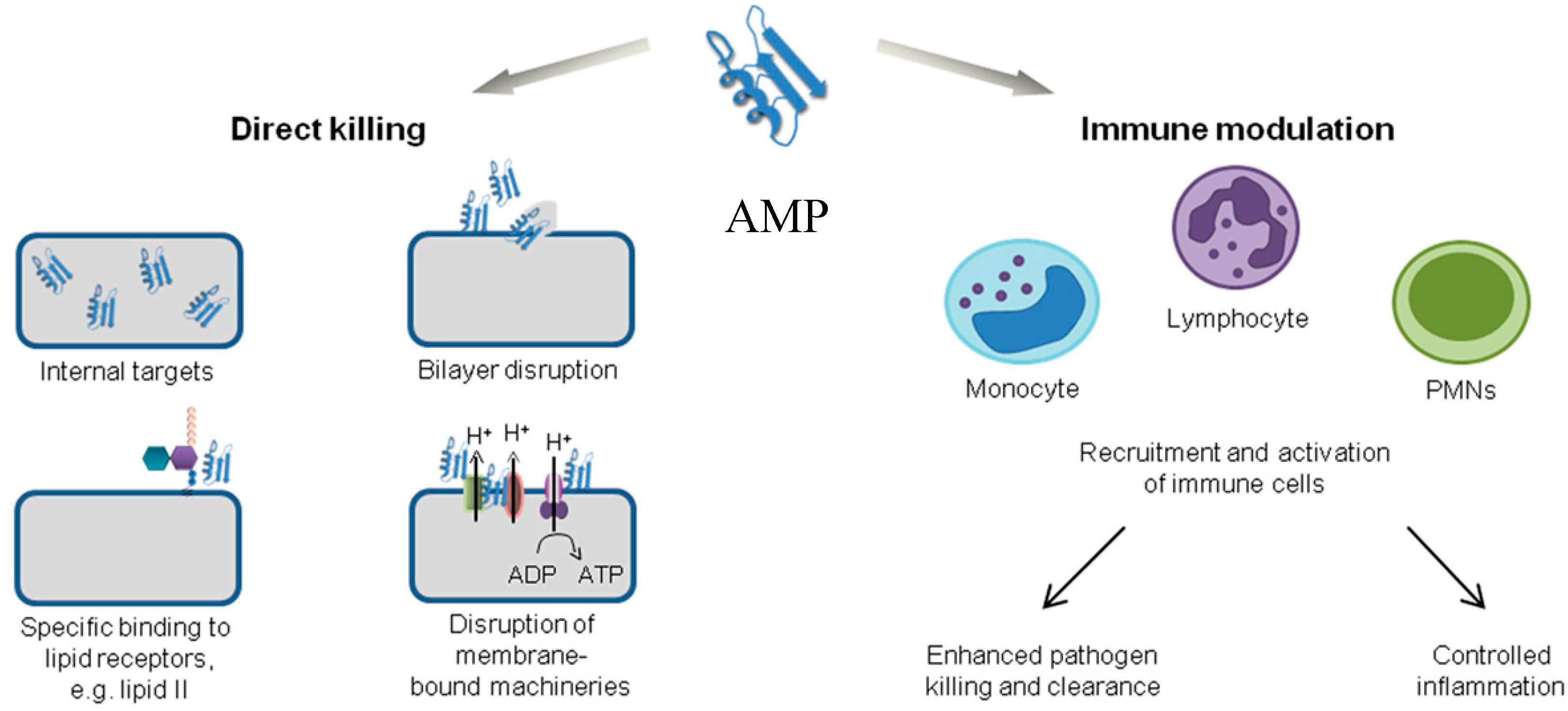 Biomolecules Free Full Text Antimicrobial Peptides