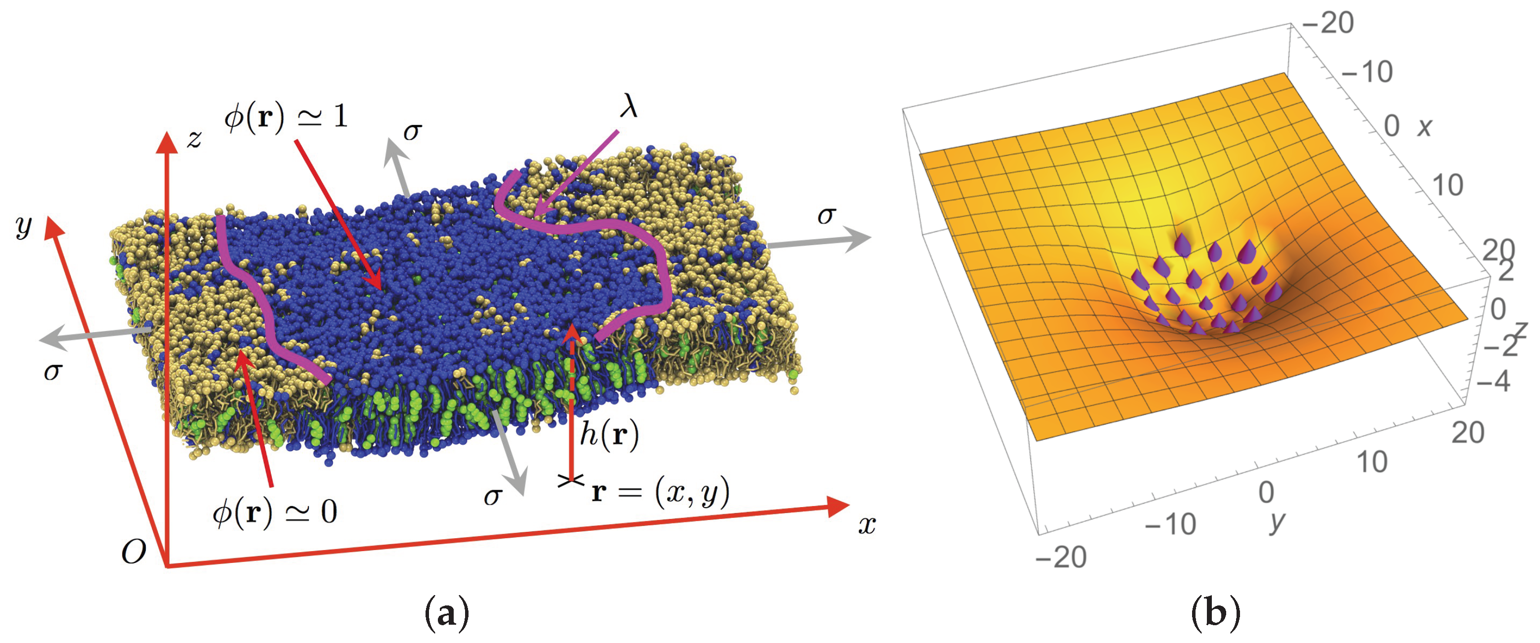 biomolecules free full text a rationale for mesoscopic domain rh mdpi com