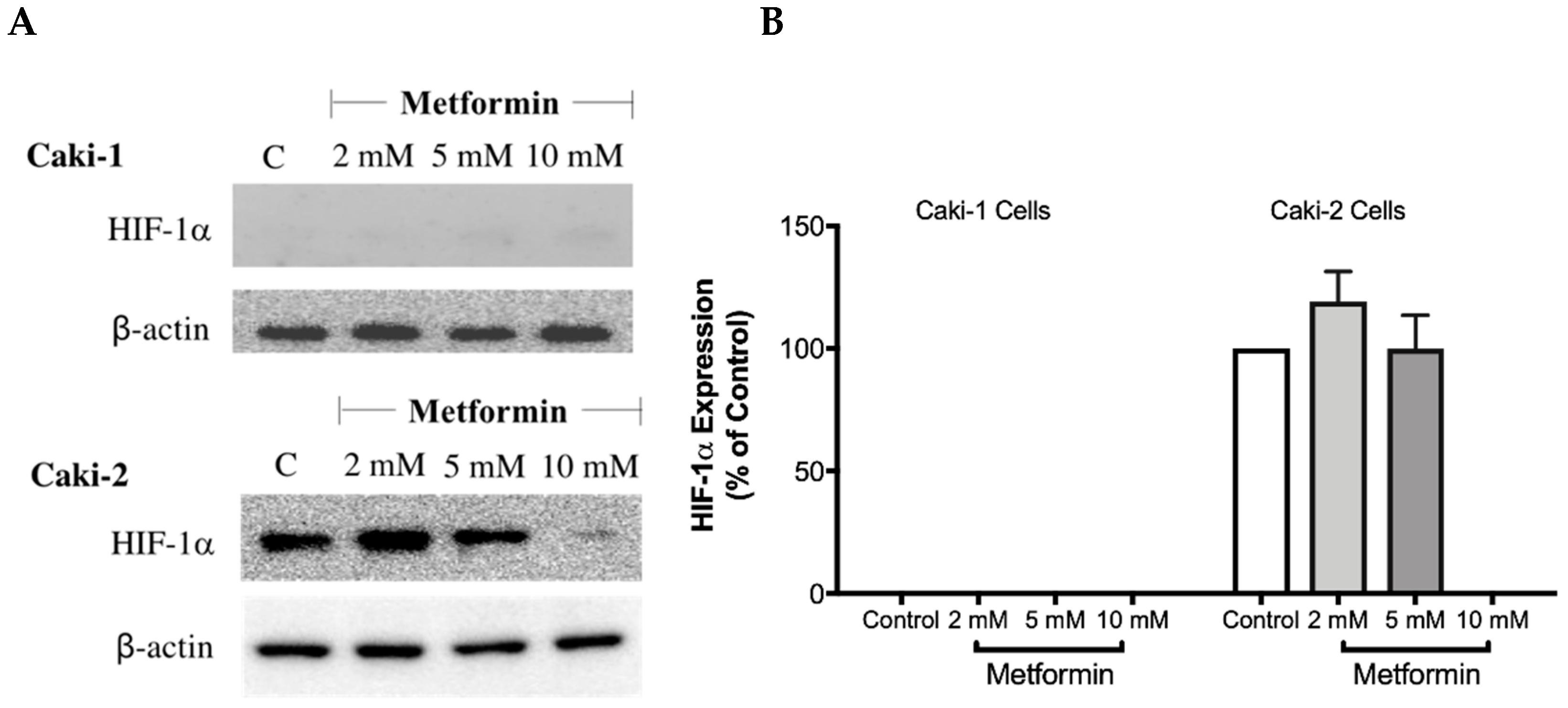 Biomolecules   Free Full-Text   Metformin Induces Different