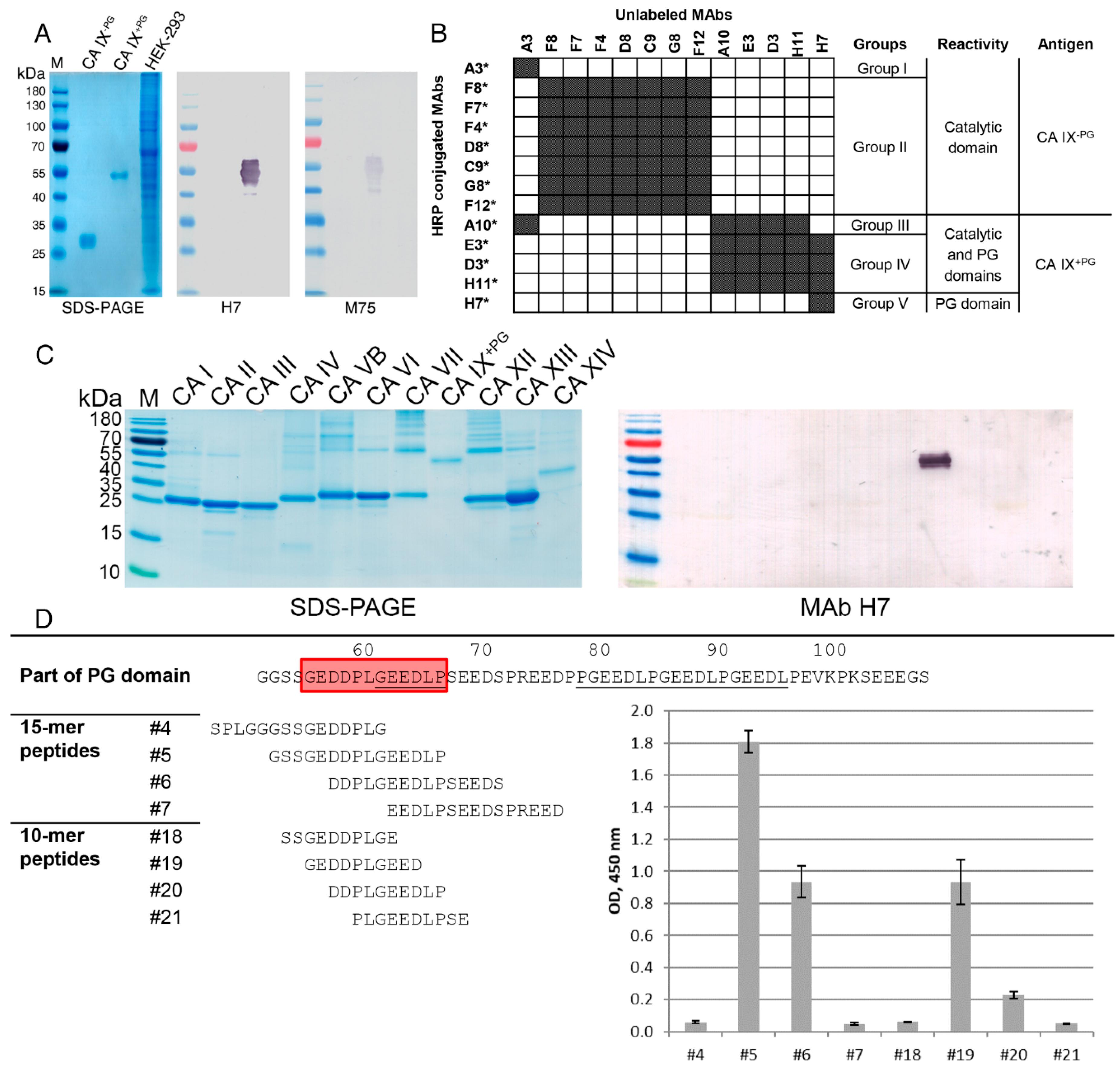 Biomolecules | Free Full-Text | New Monoclonal Antibodies