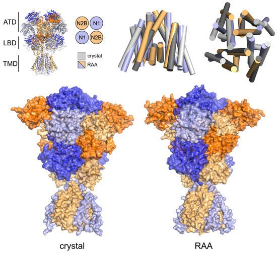 Biomolecules Free Full Text Nmda Receptor Opening And Closing Transitions Of A Molecular Machine Revealed By