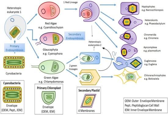 Biomolecules 10 01524 g001 550