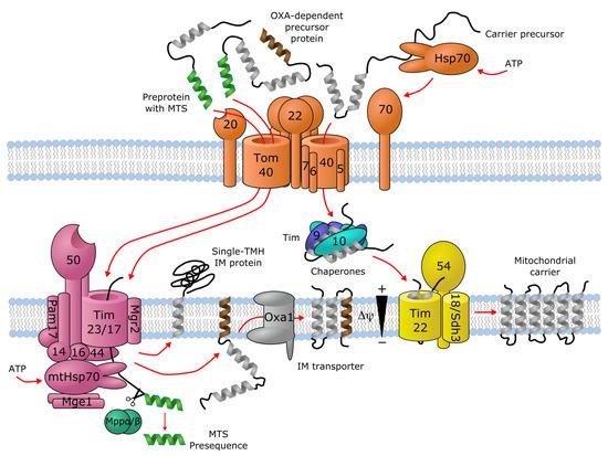Biomolecules 10 01611 g001 550