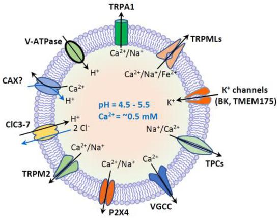 Biomolecules 11 00065 g002 550