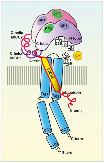 Biomolecules 11 00786 g002 550