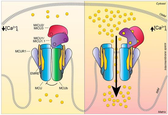 Biomolecules 11 00786 g003 550
