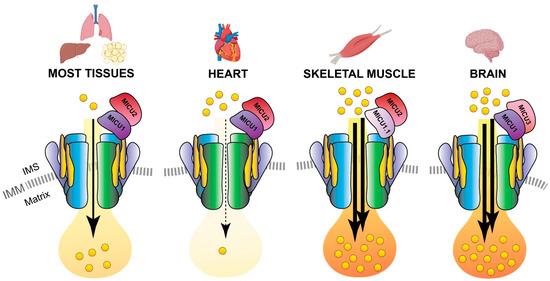 Biomolecules 11 00786 g004 550