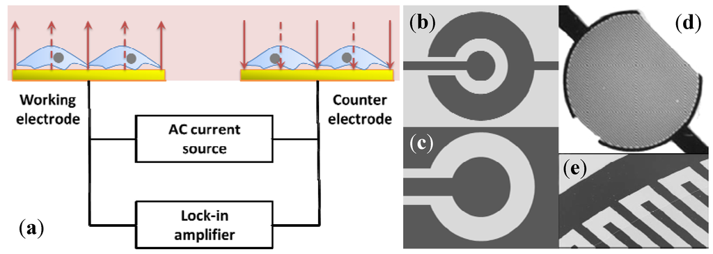 how to build an electrochemical cell