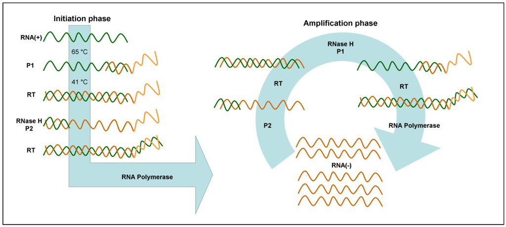 Biosensors | Free Full-Text | Isothermal Amplification Methods for the ...