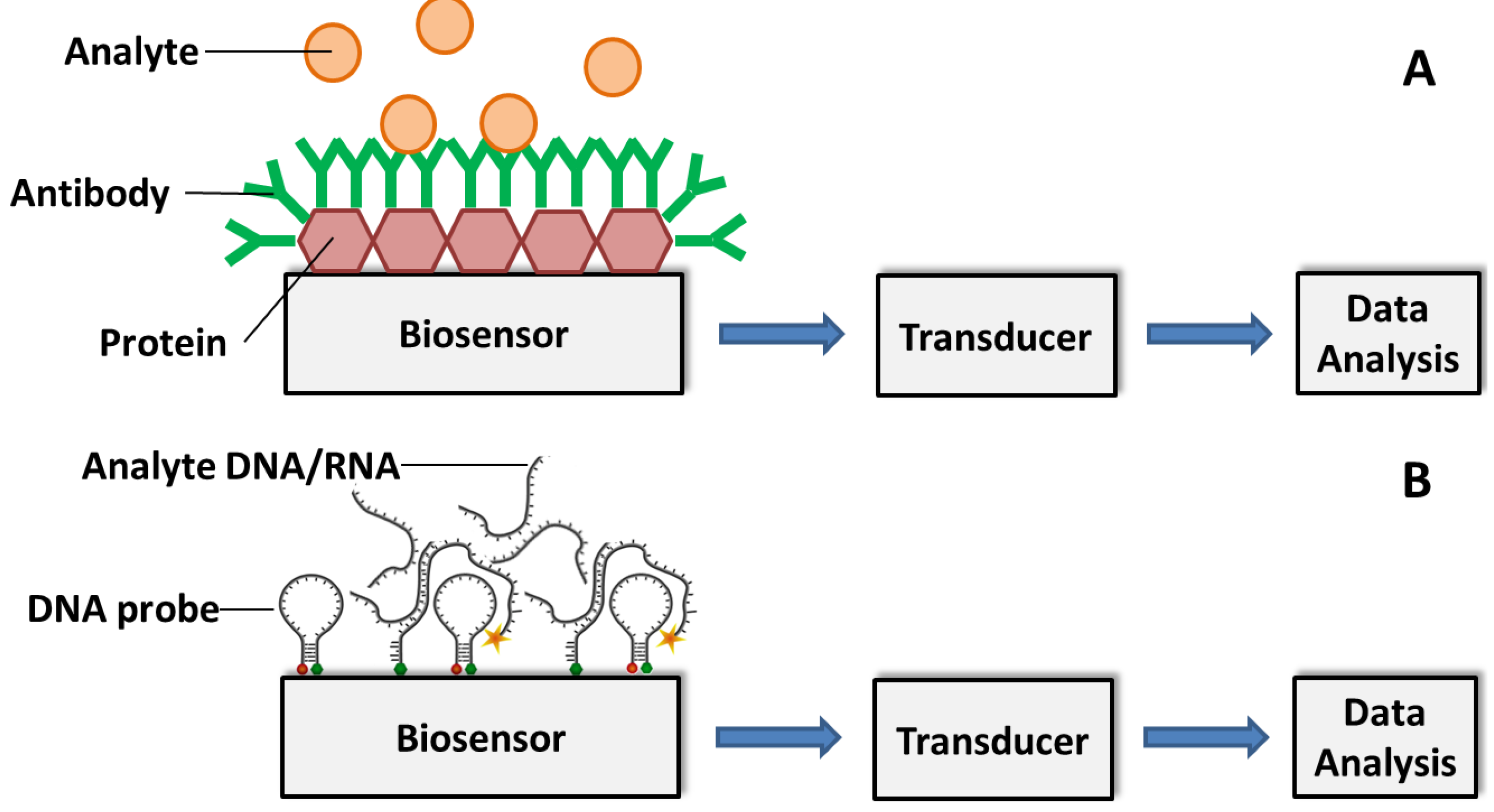 Biosensors Free Full Text Current And Prospective