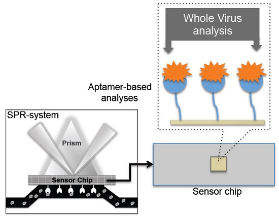 biosensor essay Read this essay on review of biosensors come browse our large digital warehouse of free sample essays get the knowledge you need.