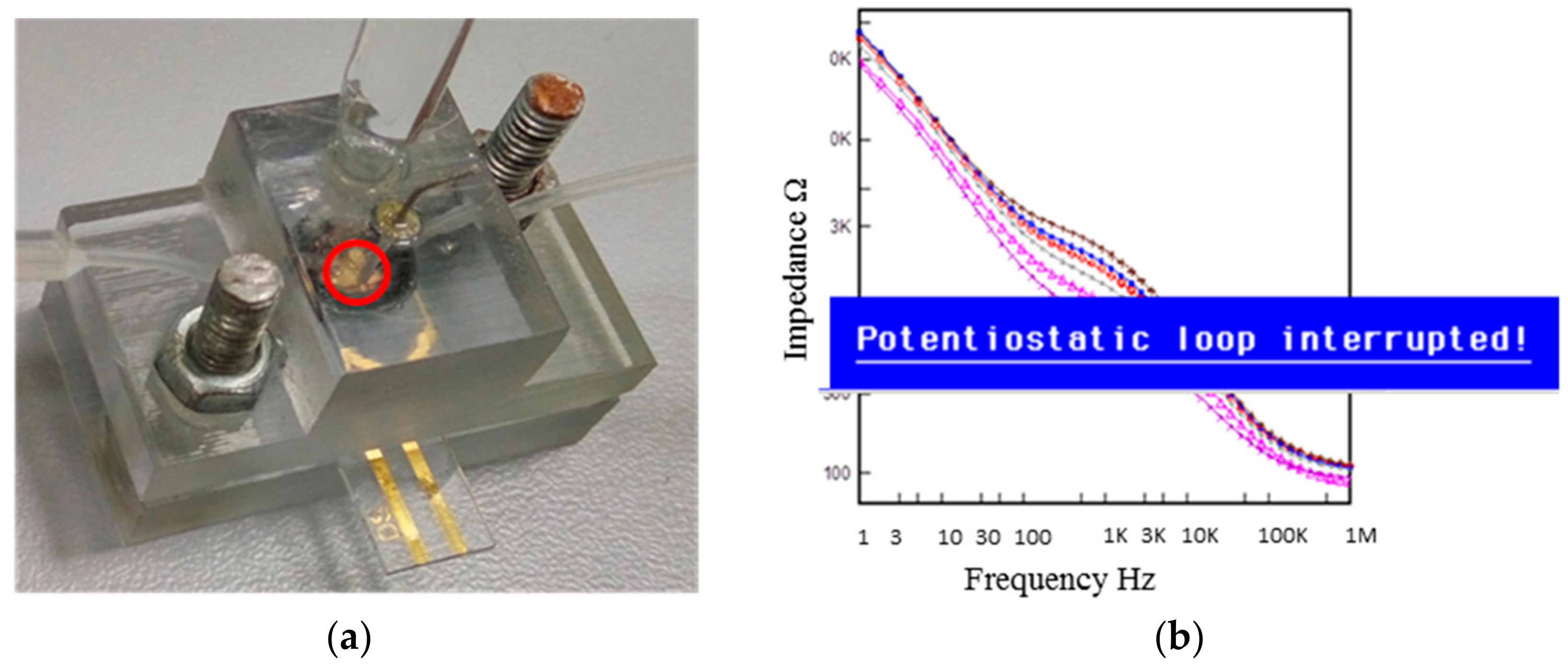 biosensor what is a biosensor essay Biosensor is a device which is used to analyze, detect and record the biological data using the electric current this device is mainly used to determine the concentration of the chemical and other biological substances.
