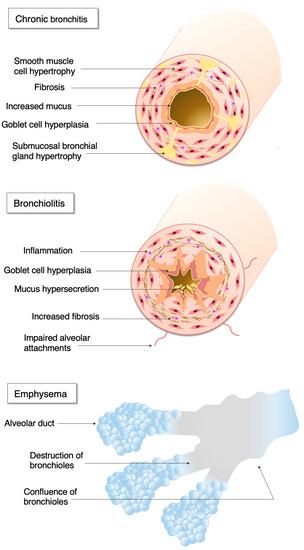 Biosensors 10 00171 g001 550