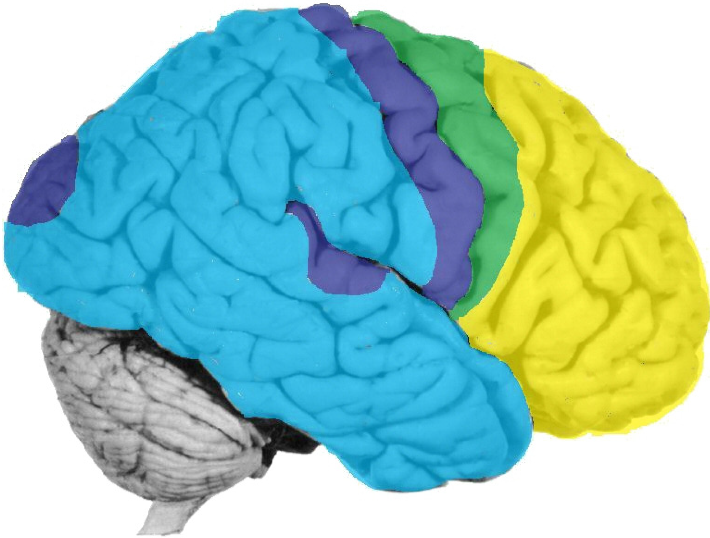 Brain Sciences Free Full Text The Id Knows More Than