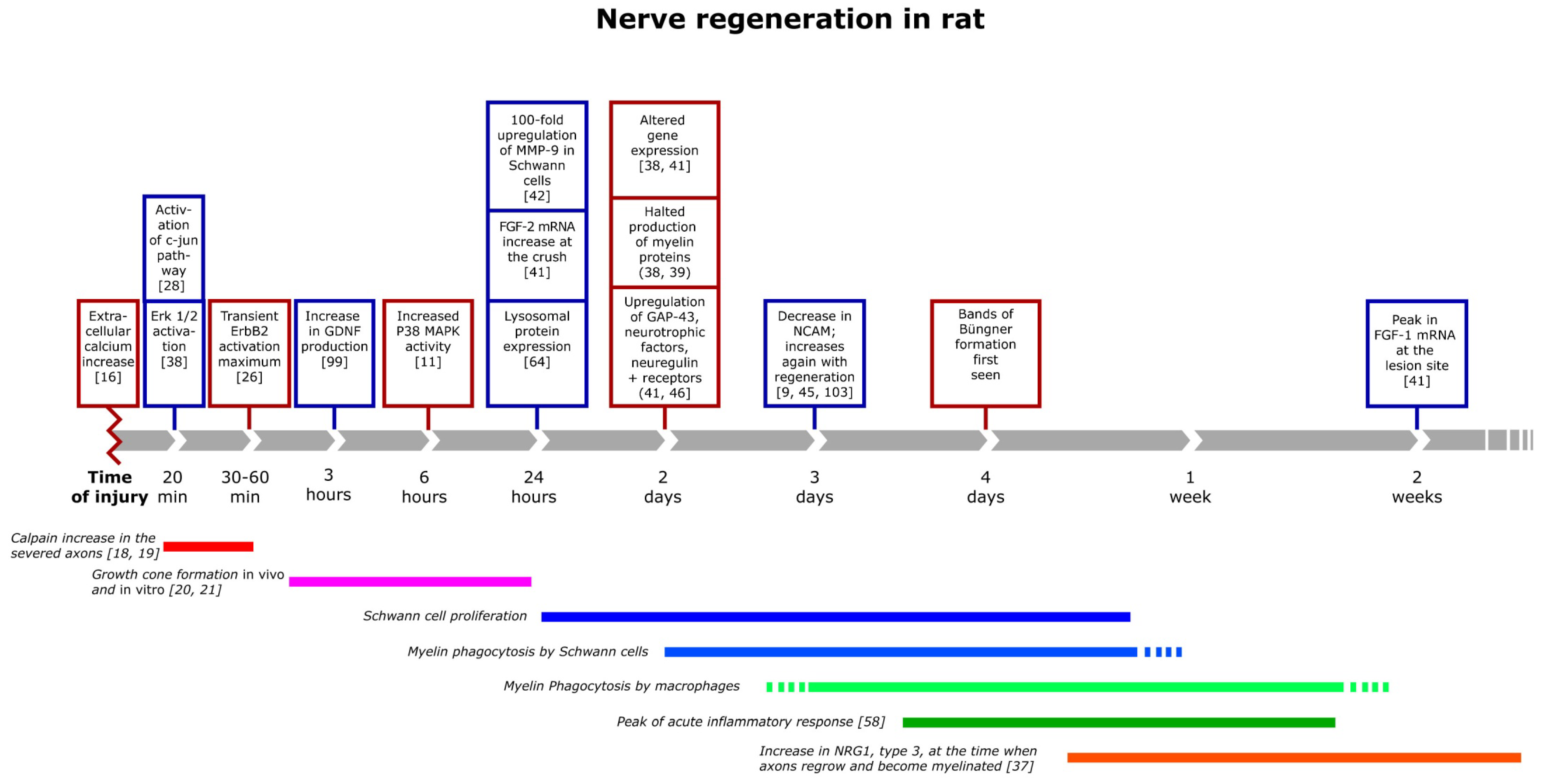 Brain Sciences   Free Full-Text   Repair of the Peripheral