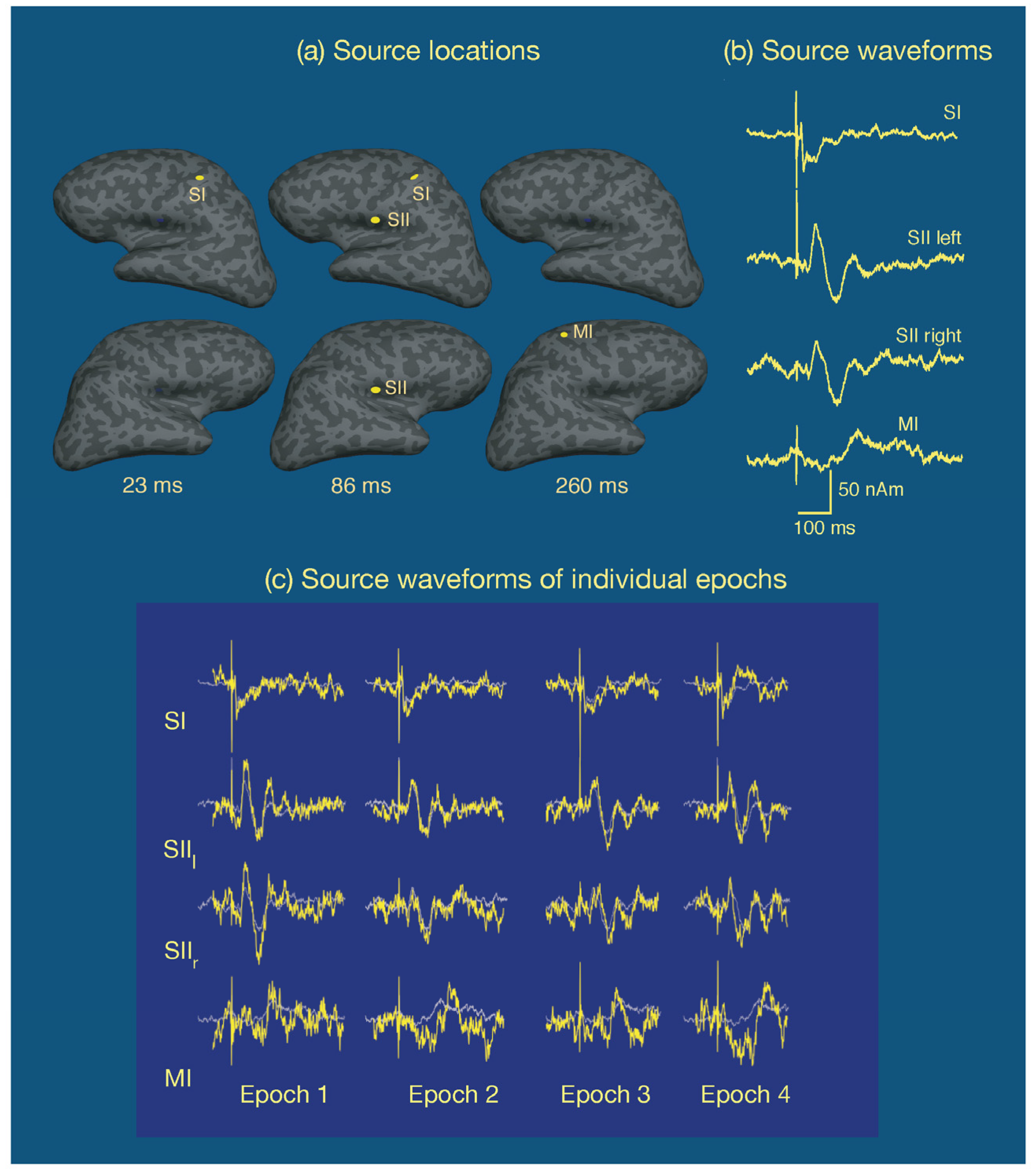 Brain Sciences | Free Full-Text | A Review of Issues Related