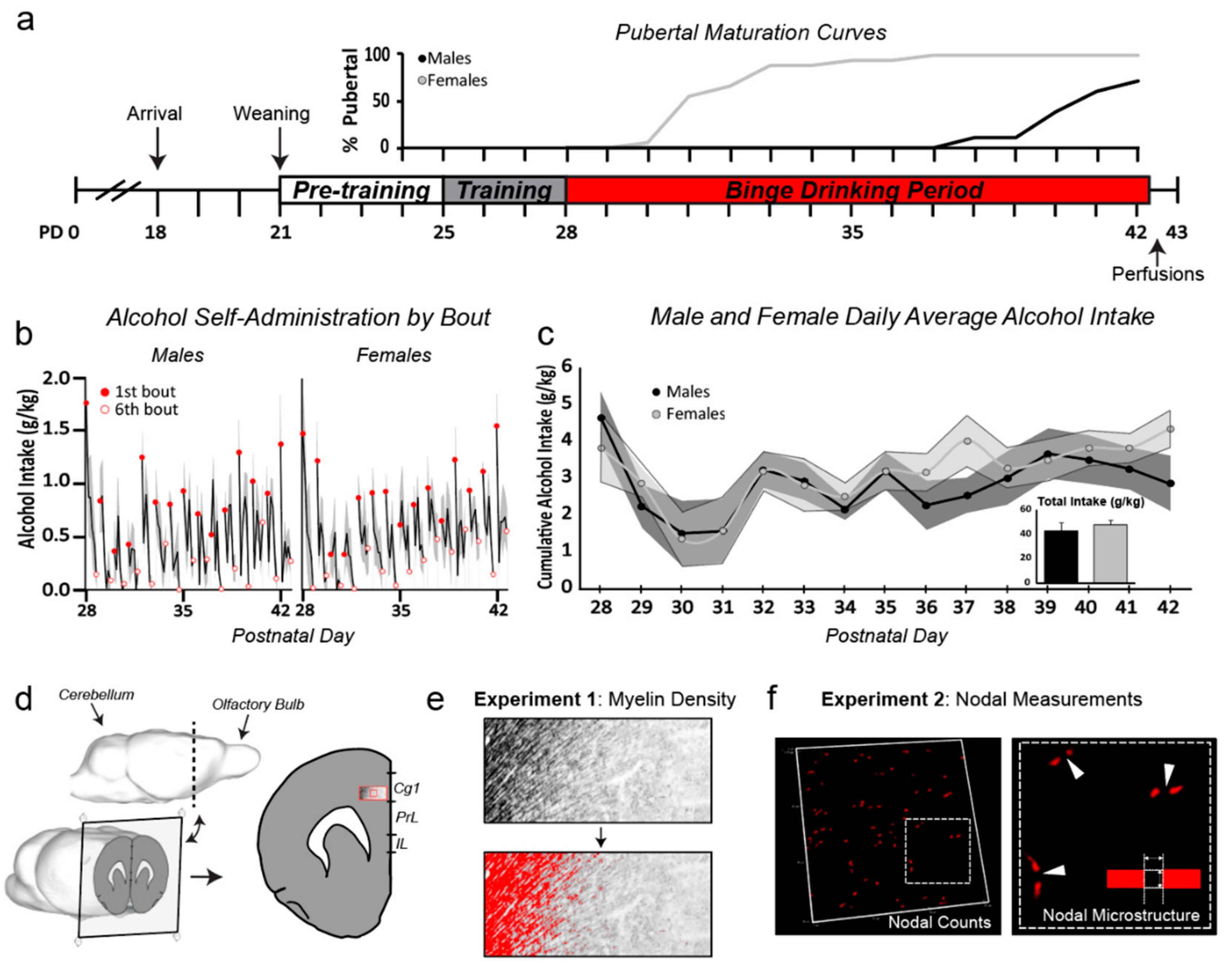 Robot Piscine Plan De Campagne maturation phenomenon in cerebral ischemia v book pdf free