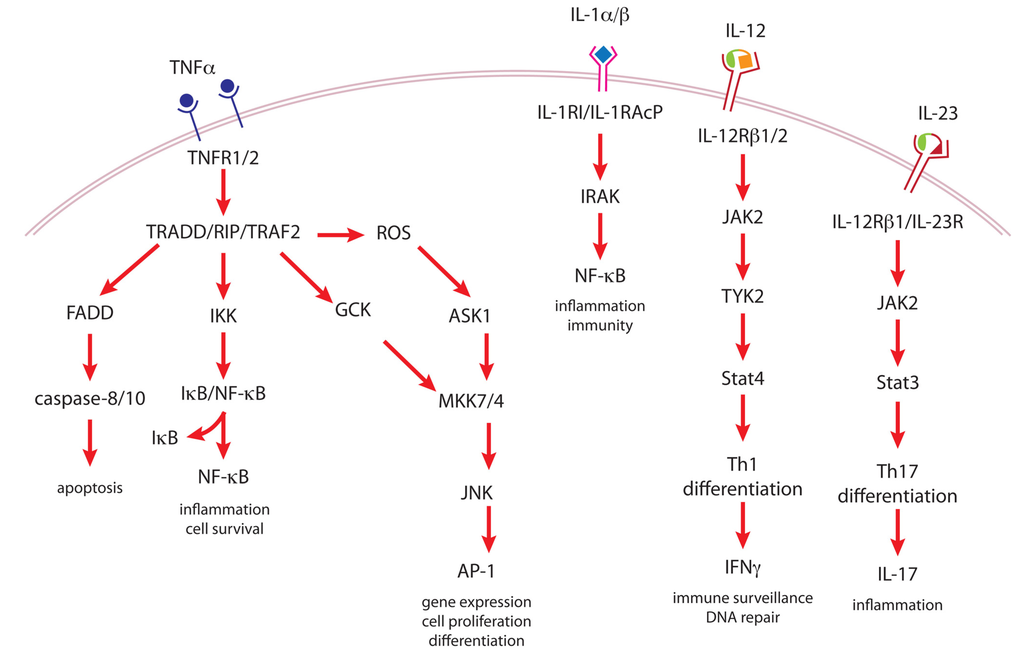 Cancers | Free Full-Text | Molecular Mechanisms of Mouse