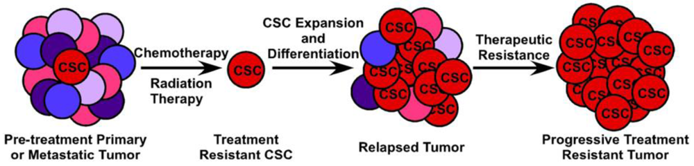 Cancers Free Full Text The Role Of Colorectal Cancer Stem Cells In Metastatic Disease And Therapeutic Response Html