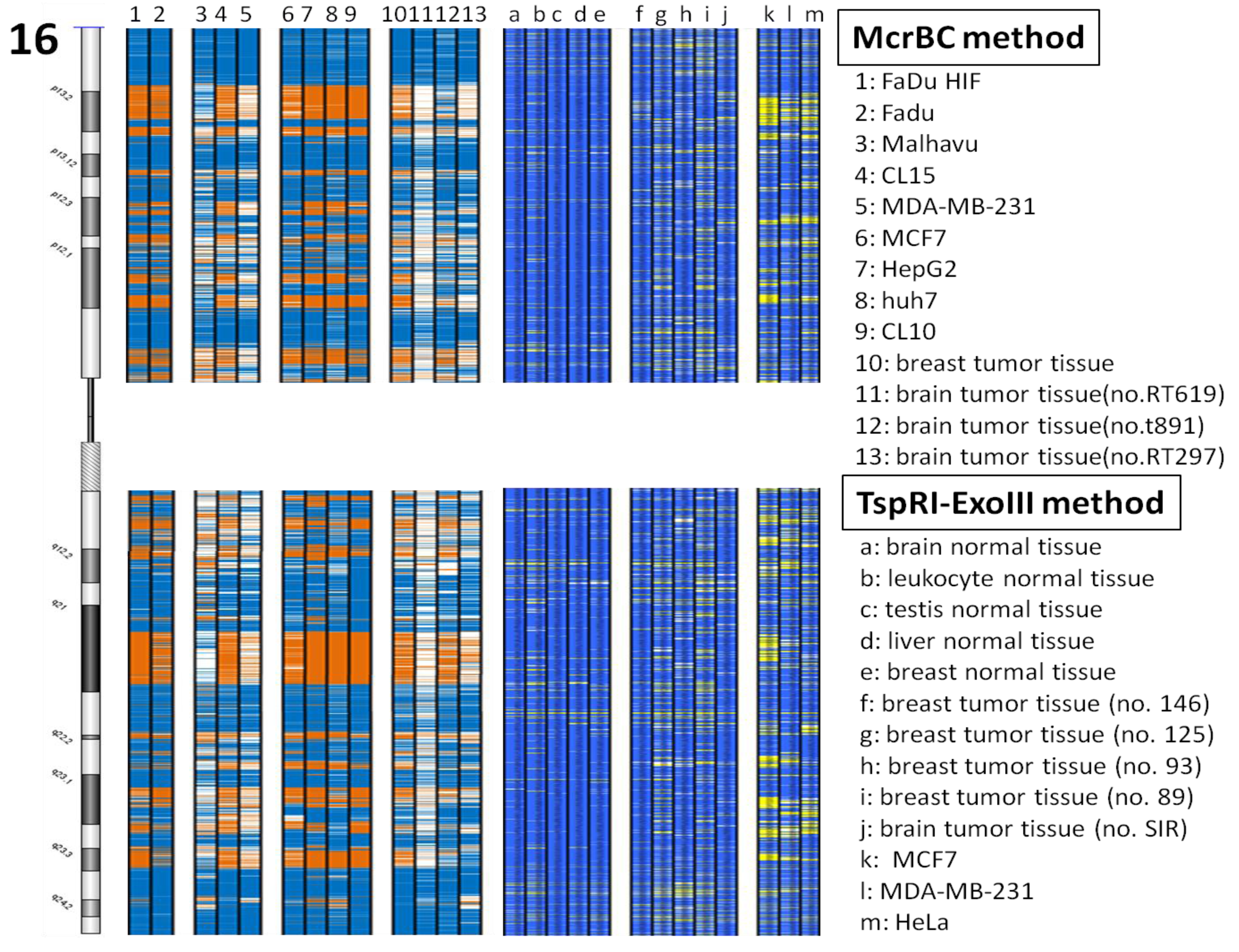 Cancers free full text common altered epigenomic domains in cancers 03 01996f2 1024 falaconquin