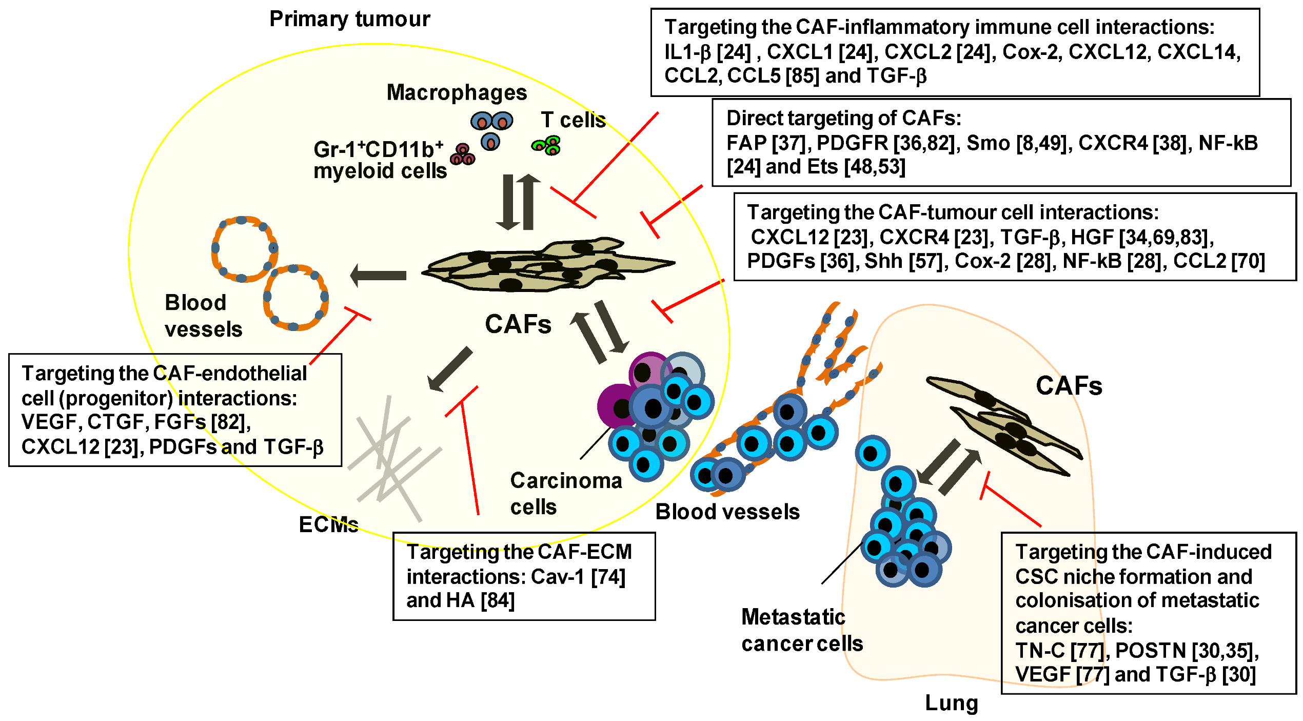 Cancers | Free Full-Text | Carcinoma-Associated Fibroblasts Are a
