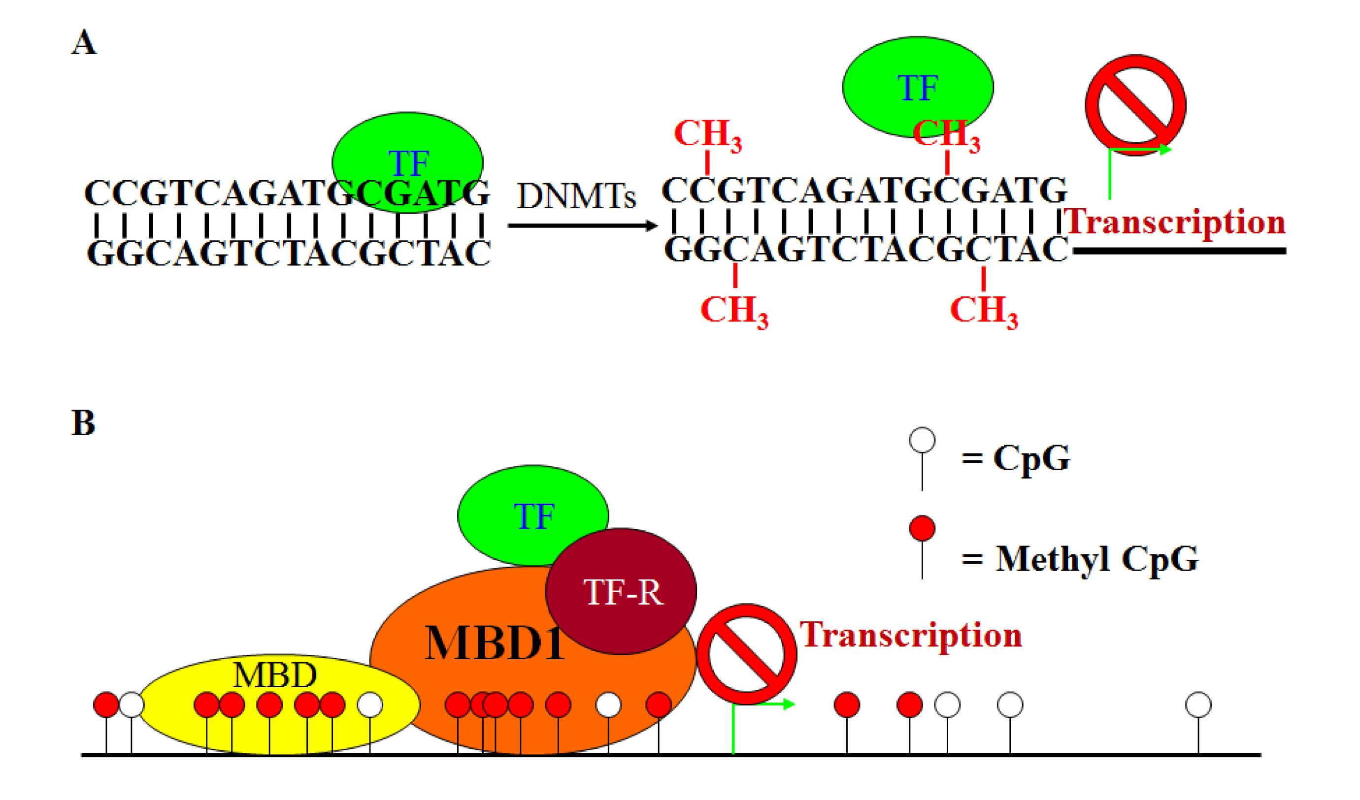 Cancers Free Full Text Epigenetics And Colorectal Cancer Pathogenesis Html